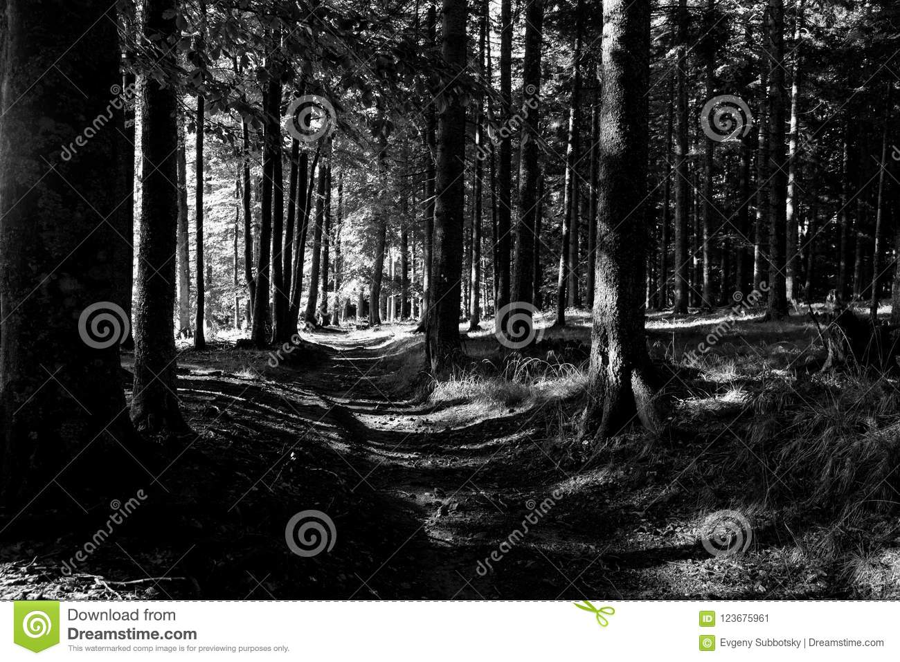 Deep forest trail black and white slovenia travel