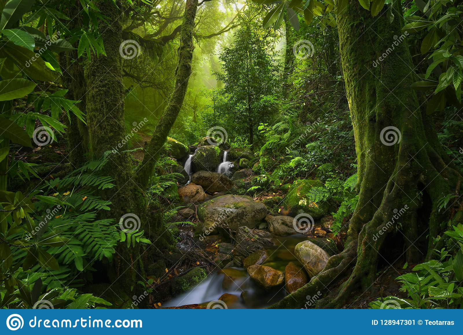 Southeast Asian Deep Jungle Stock Image - Image of fantasy