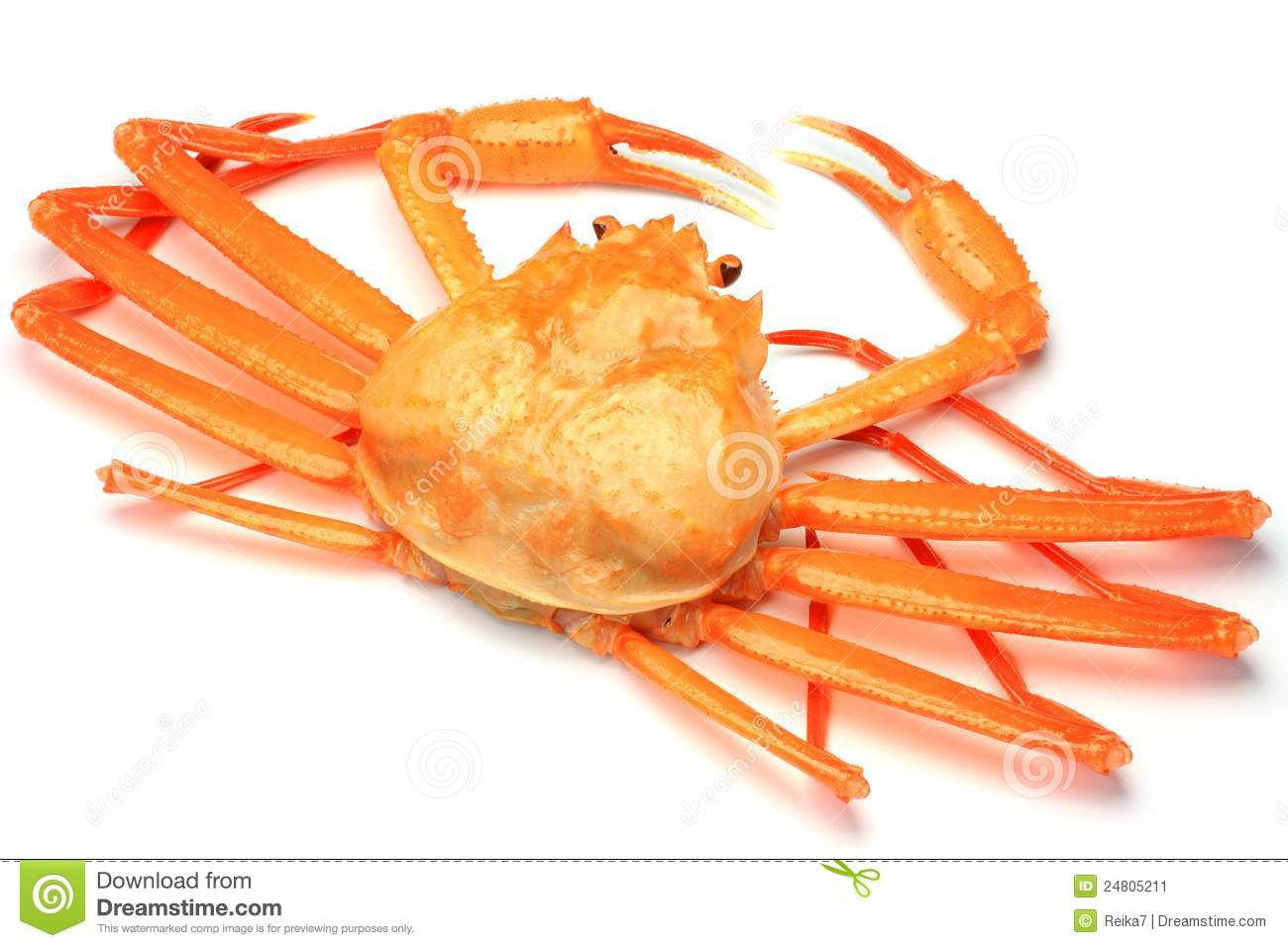Pictures Of Red Snow Crab 106