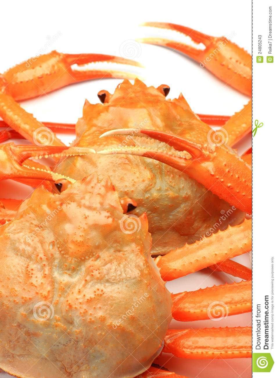 Pictures Of Red Snow Crab 36