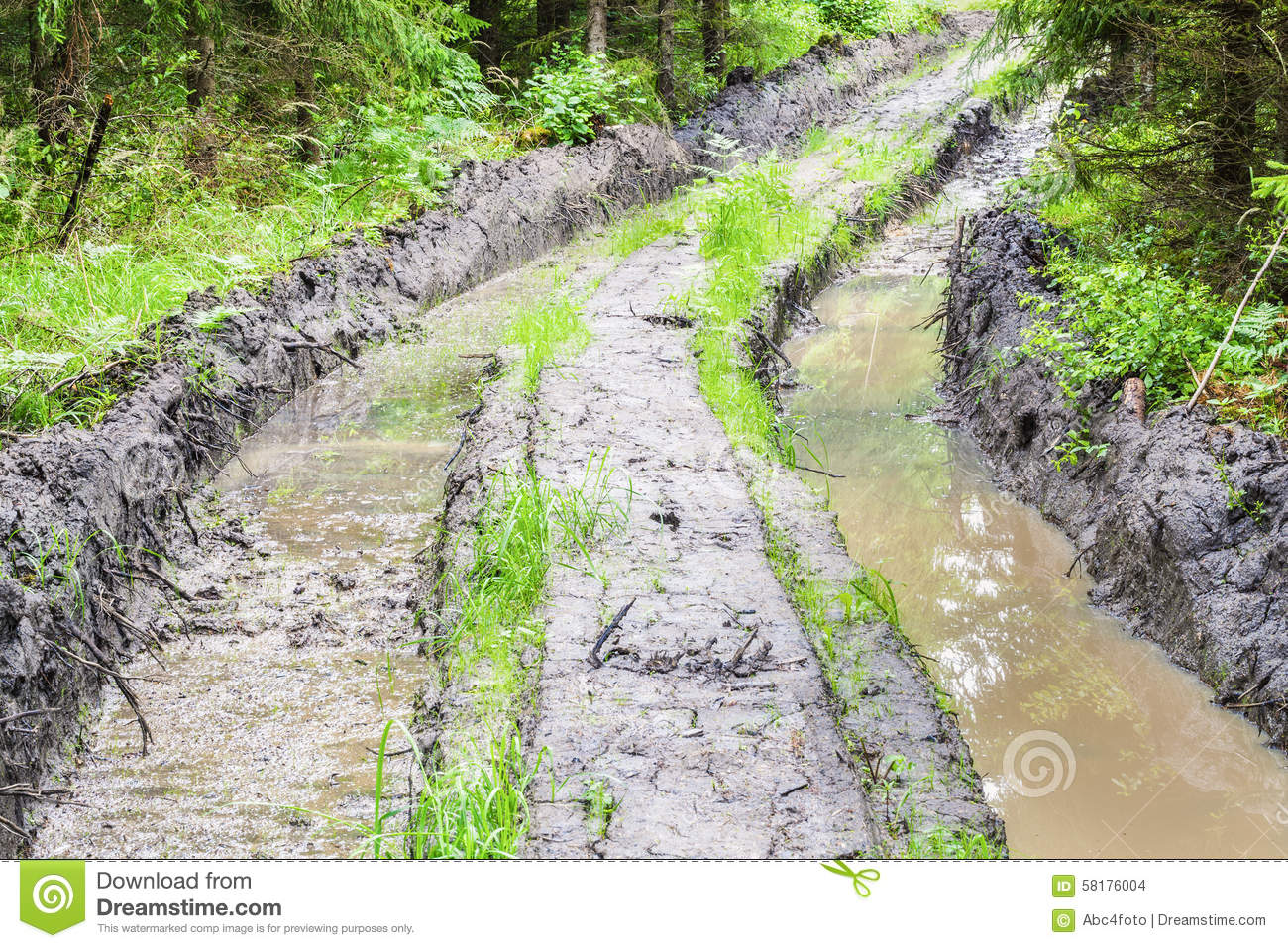 deep rutted road through the forest stock photo image of energy