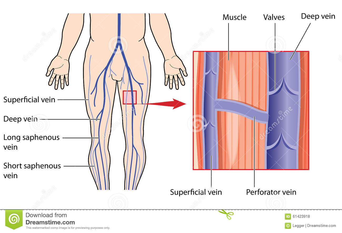 Superficial definition anatomy 754577 - follow4more.info