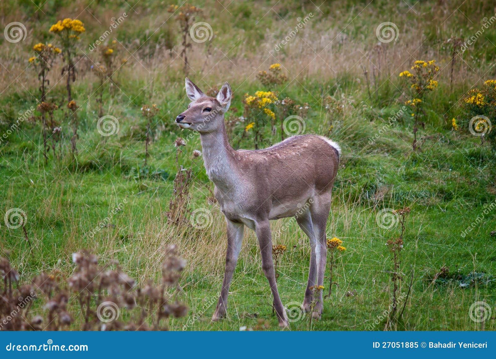free porn red deer