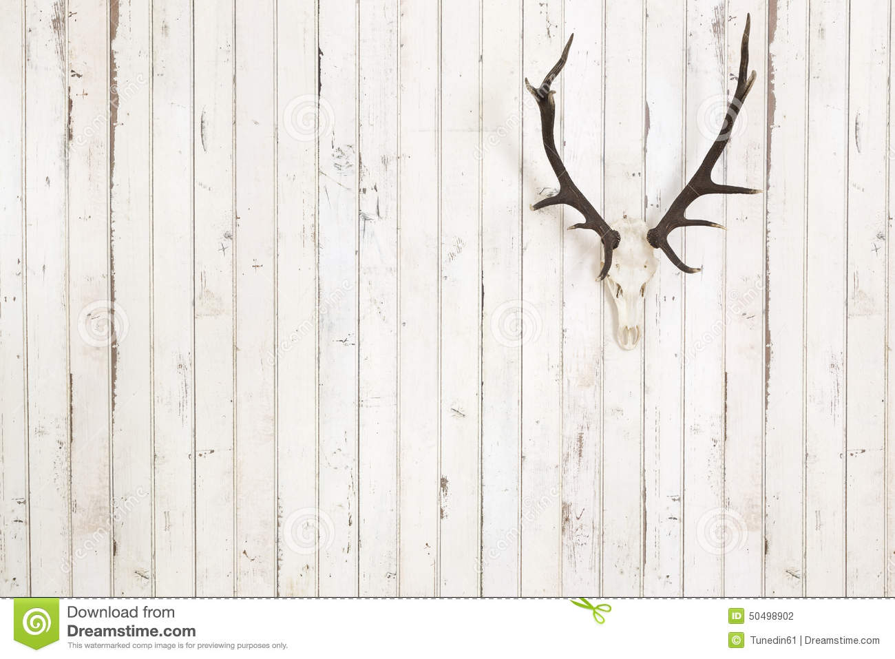 Deer antler on old white wooden wall