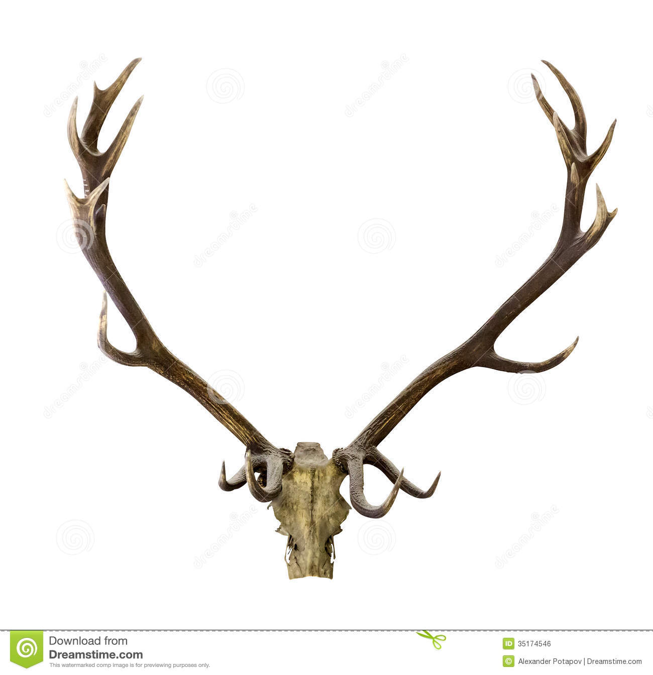 Deer Skull Clip Art Deer antlers isolated on white