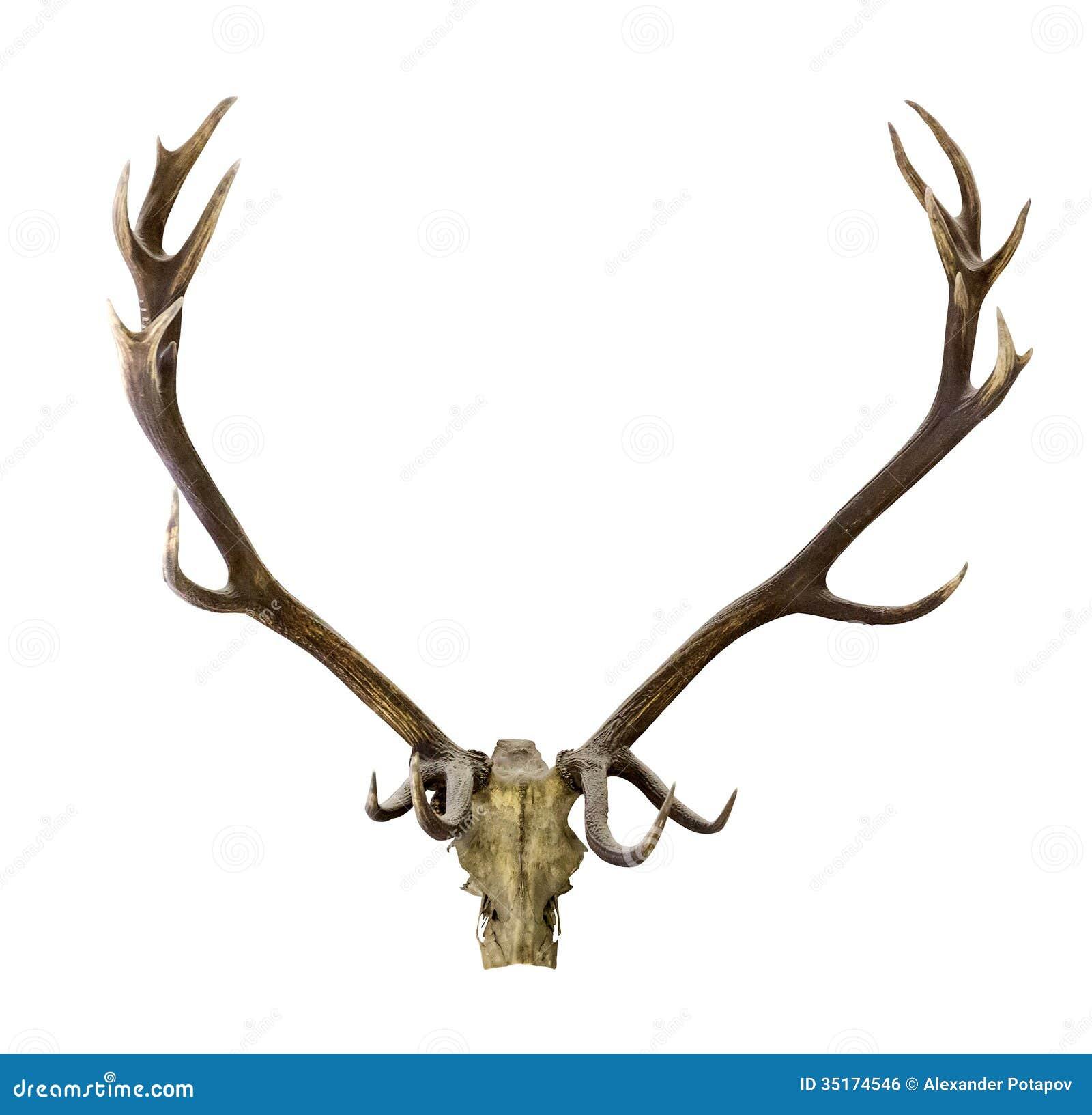 Deer Skull Clip Art Deer antlers isolated on white