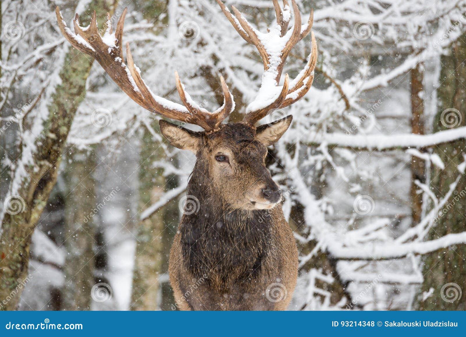Single-Horned Deer Excites Fantasy Fans - CBS News