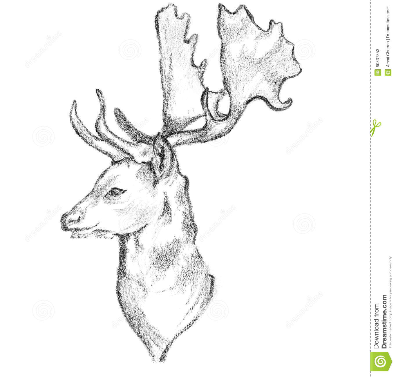 Hand drawn pencil sketch art of deer by face side