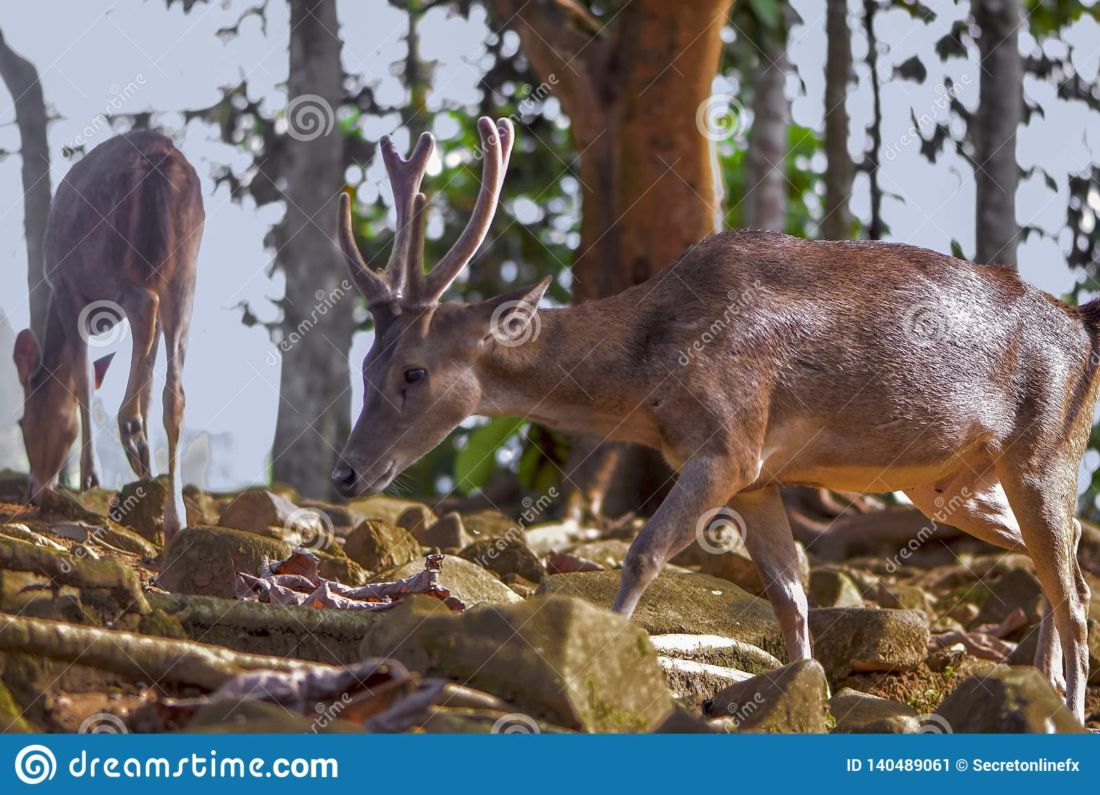 Deer in the forest wildlife