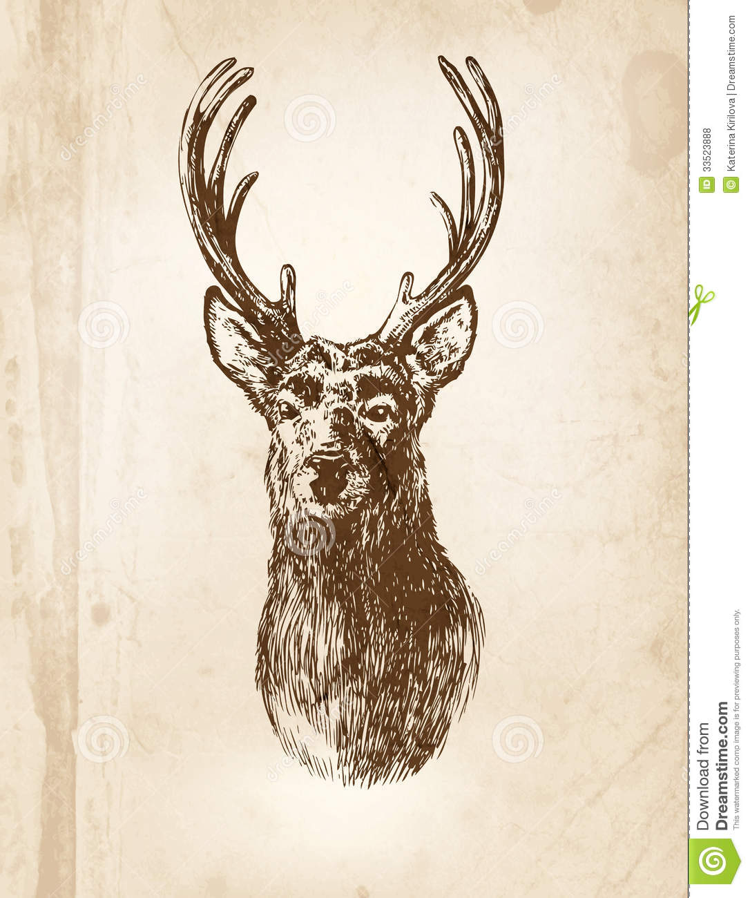 Deer Head Stock Photos And Images  123RF
