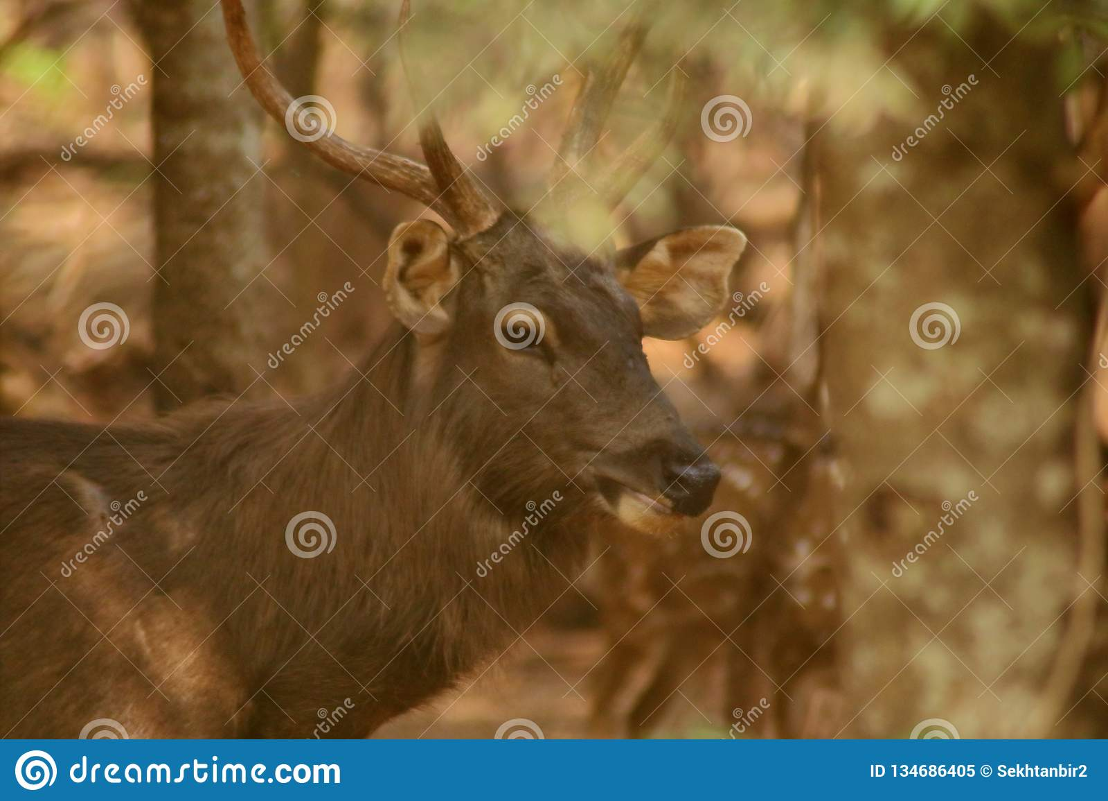 The Deer Have Big Horn