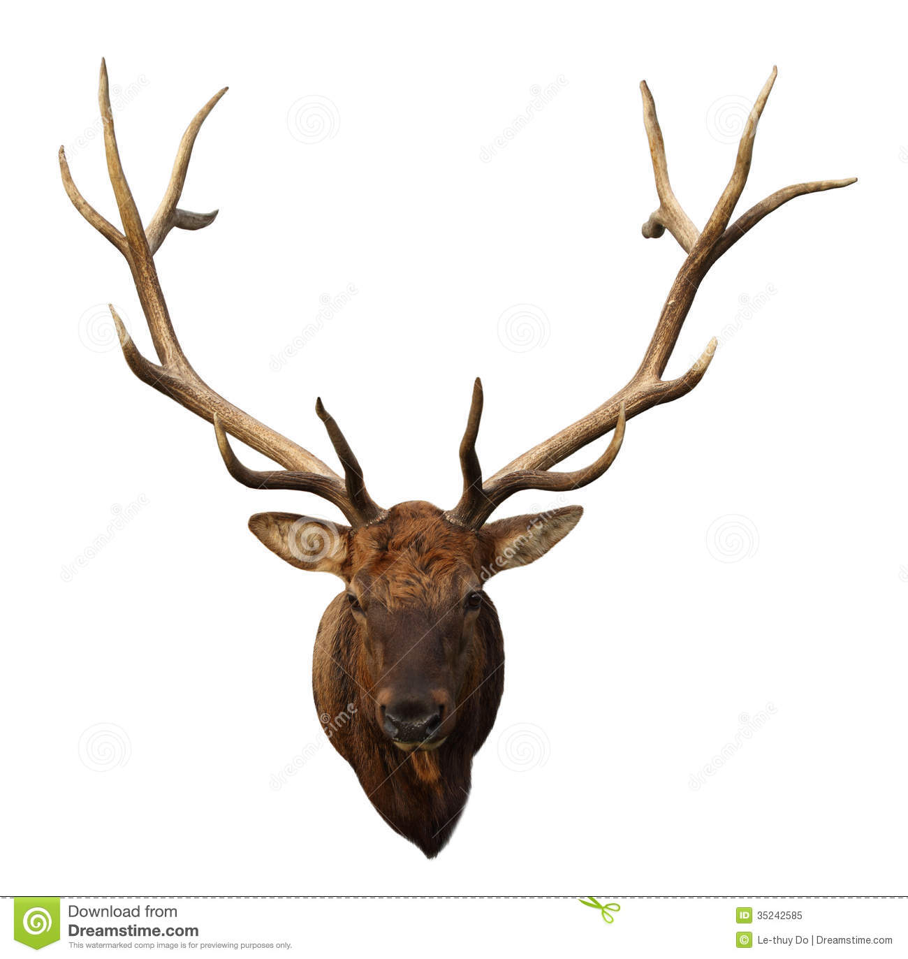 Deer Head with beautiful antlers isolated on white background.