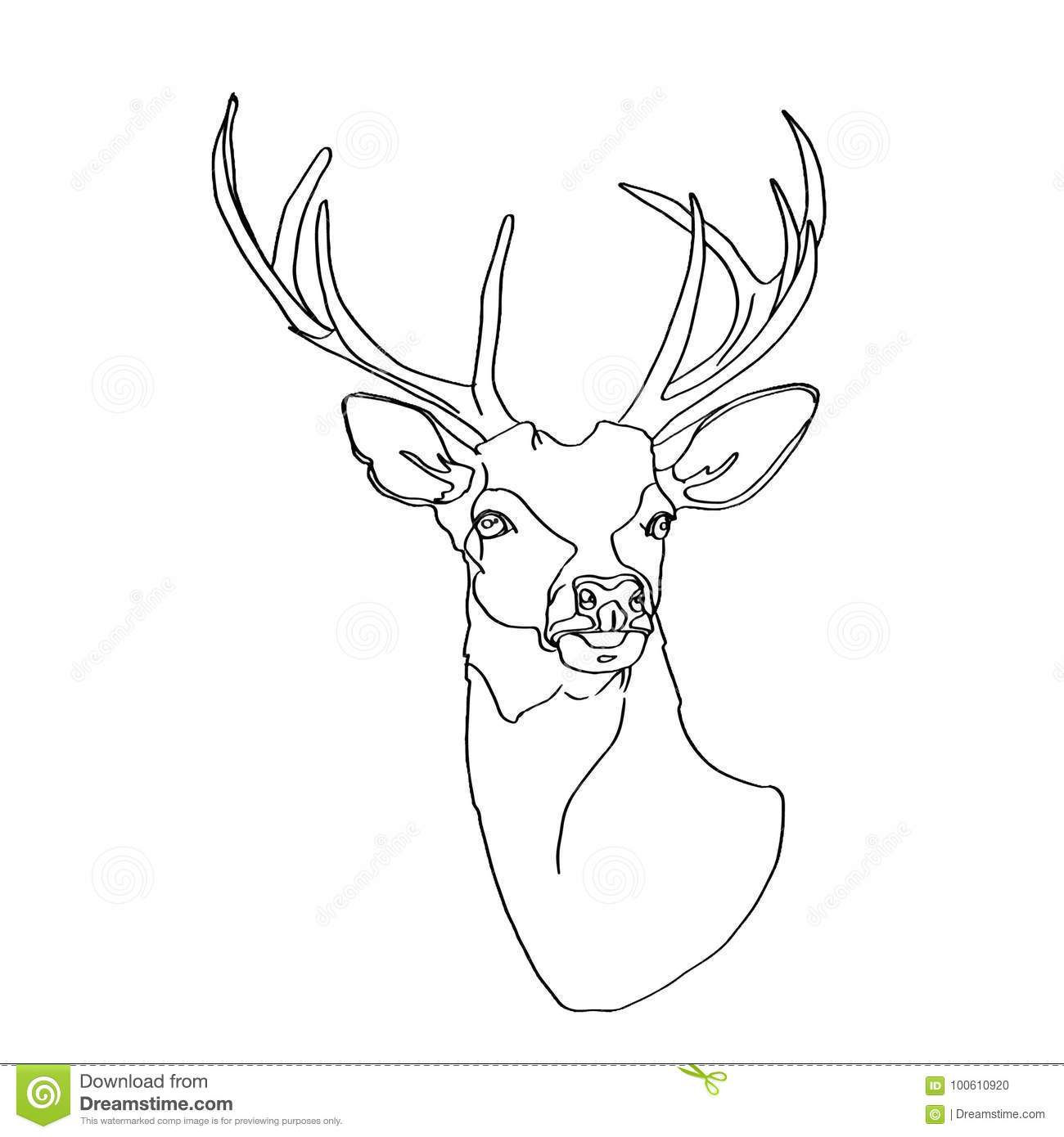 Deer head drawing