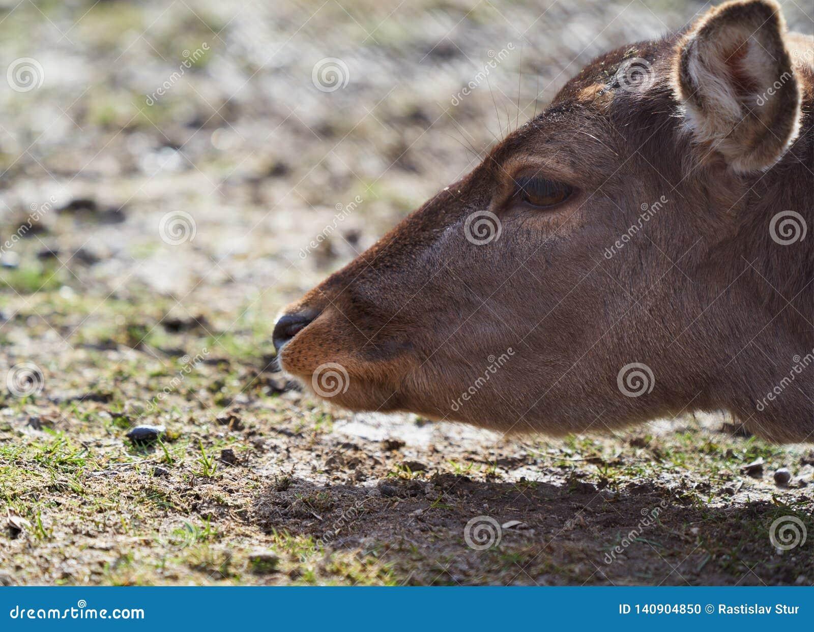 Deer head and shadow