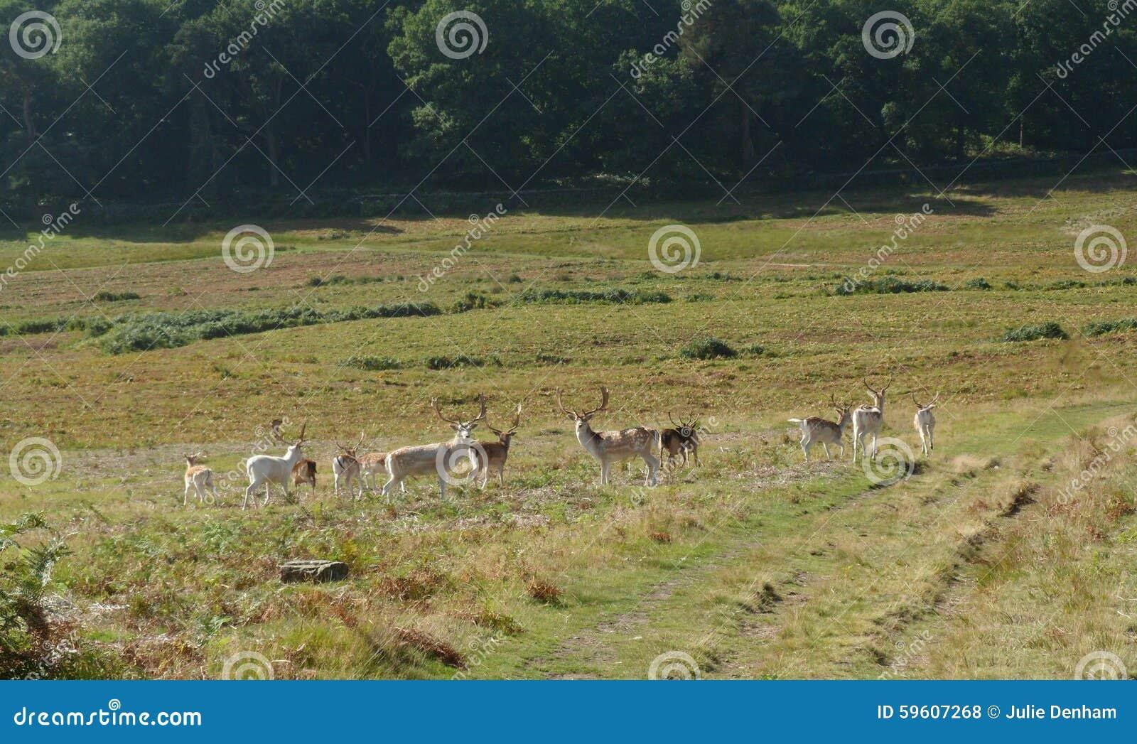 Landscaping Ties Red Deer : Deer herd landscape stock photo image