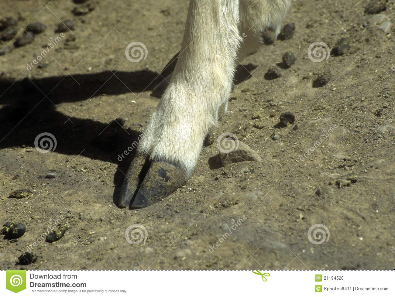 deer hooves - photo #46