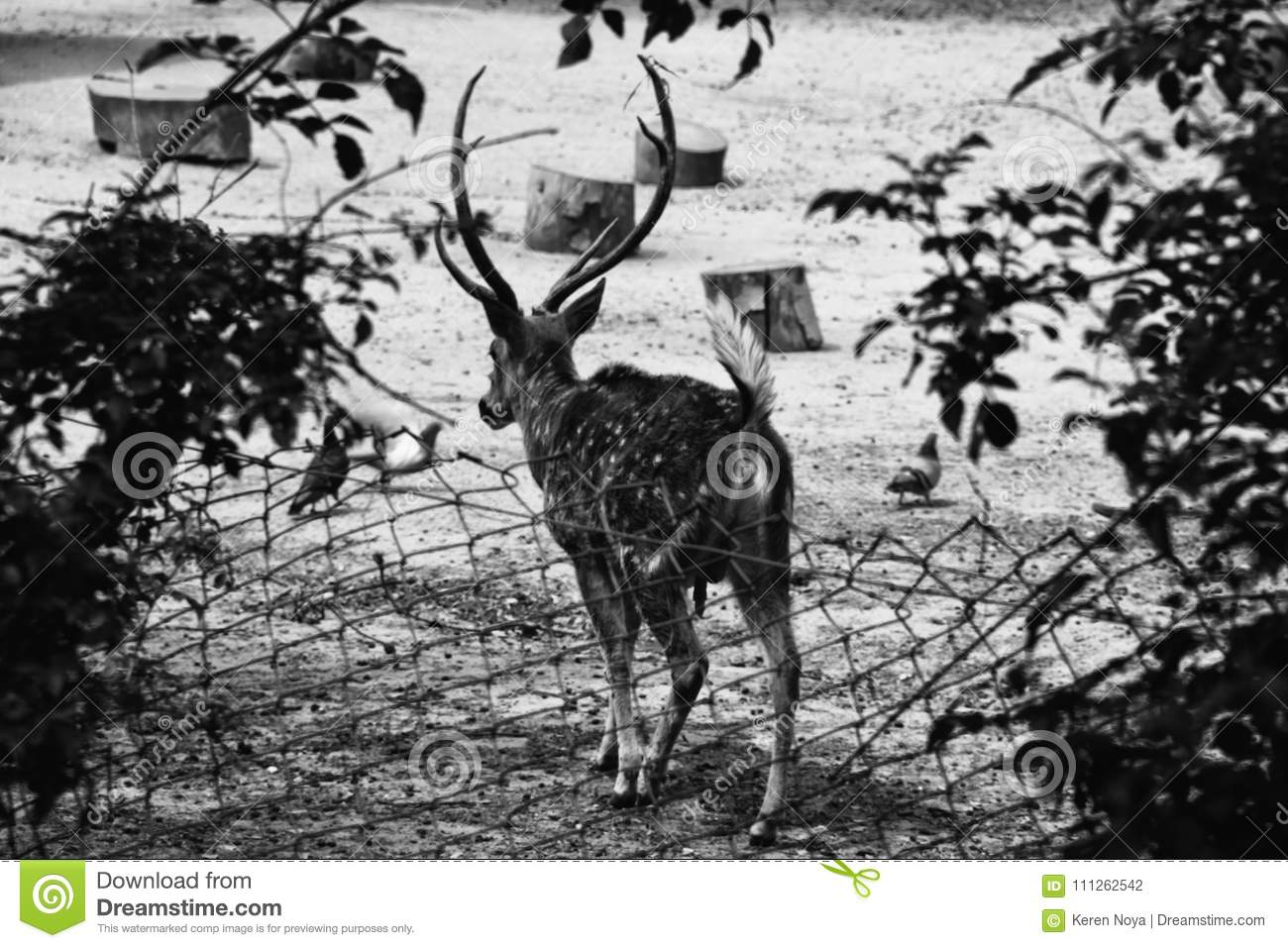 An artistic black and white photo of a deer stock photo image of