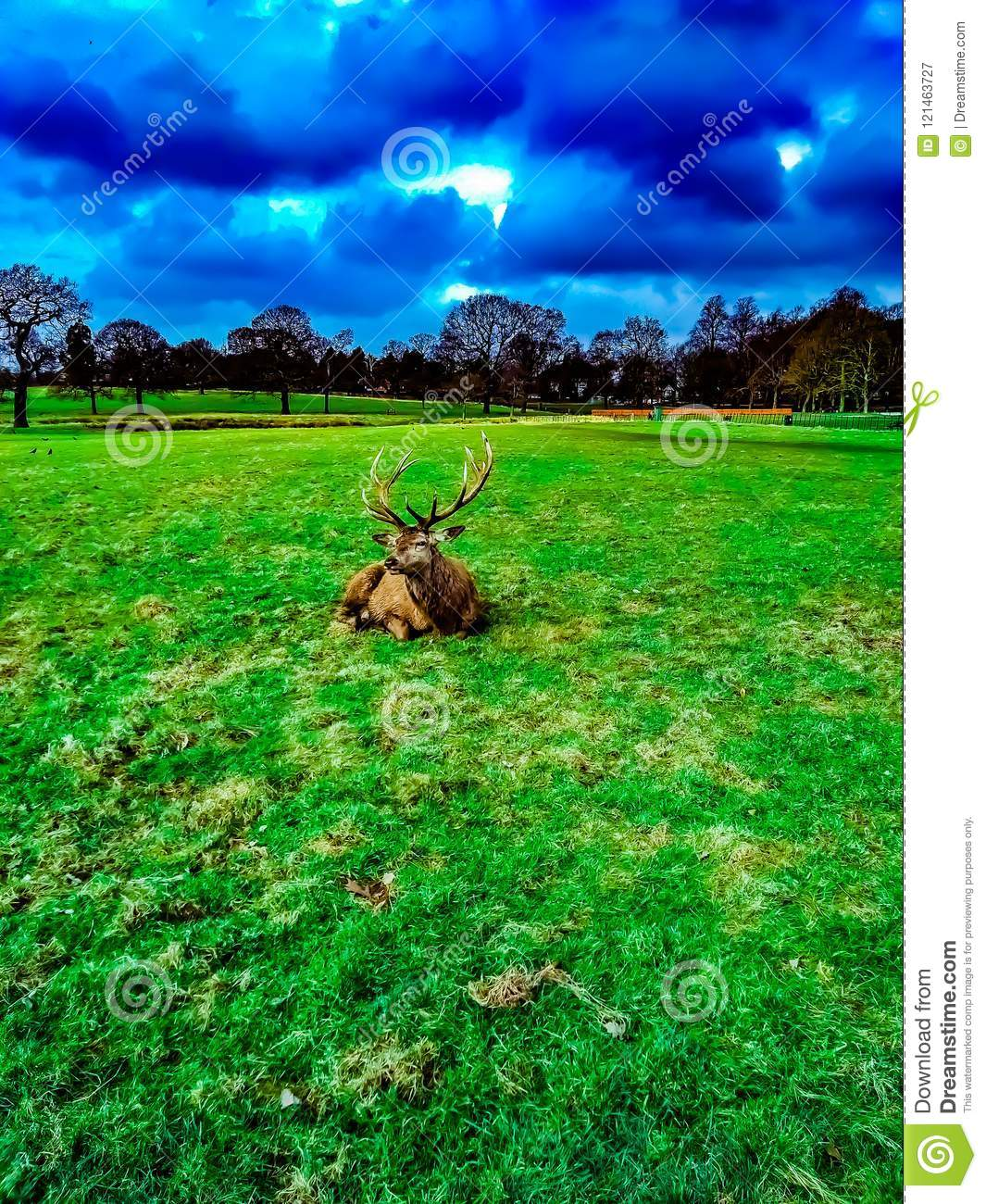 Deer lying on the grass in the Wollaton Hall Park in Nottingham, United Kingdom.