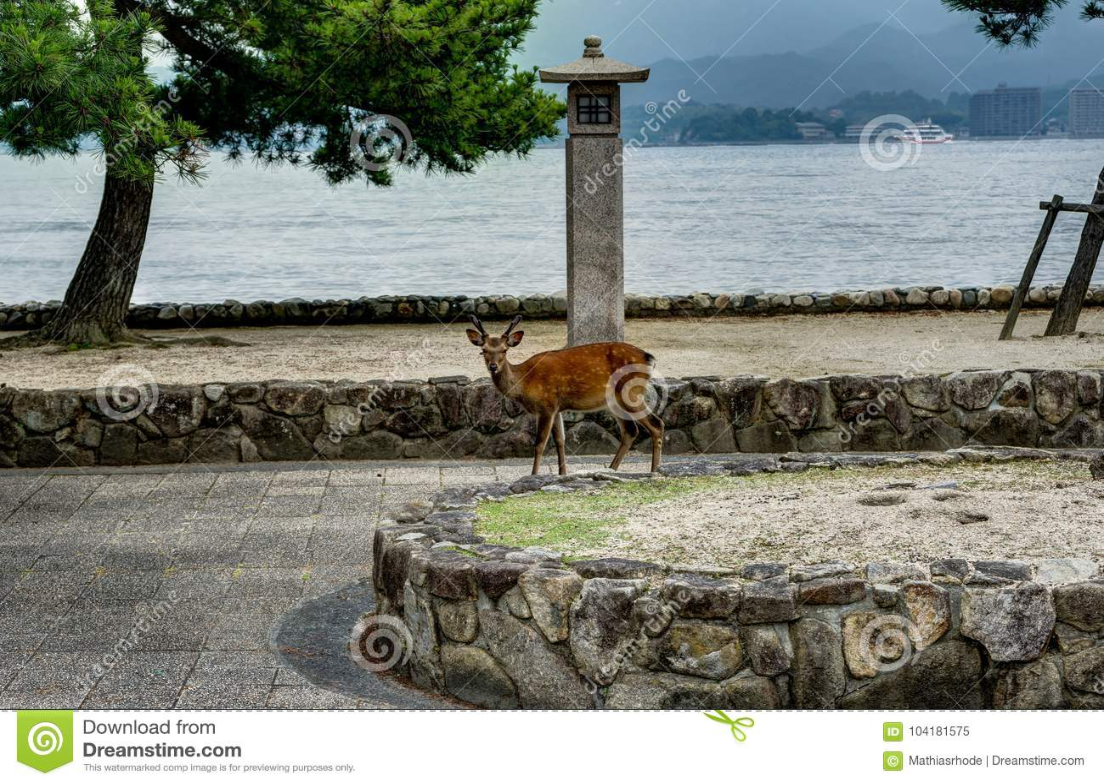 The deer of Miyajima Island in Hiroshima, Japan