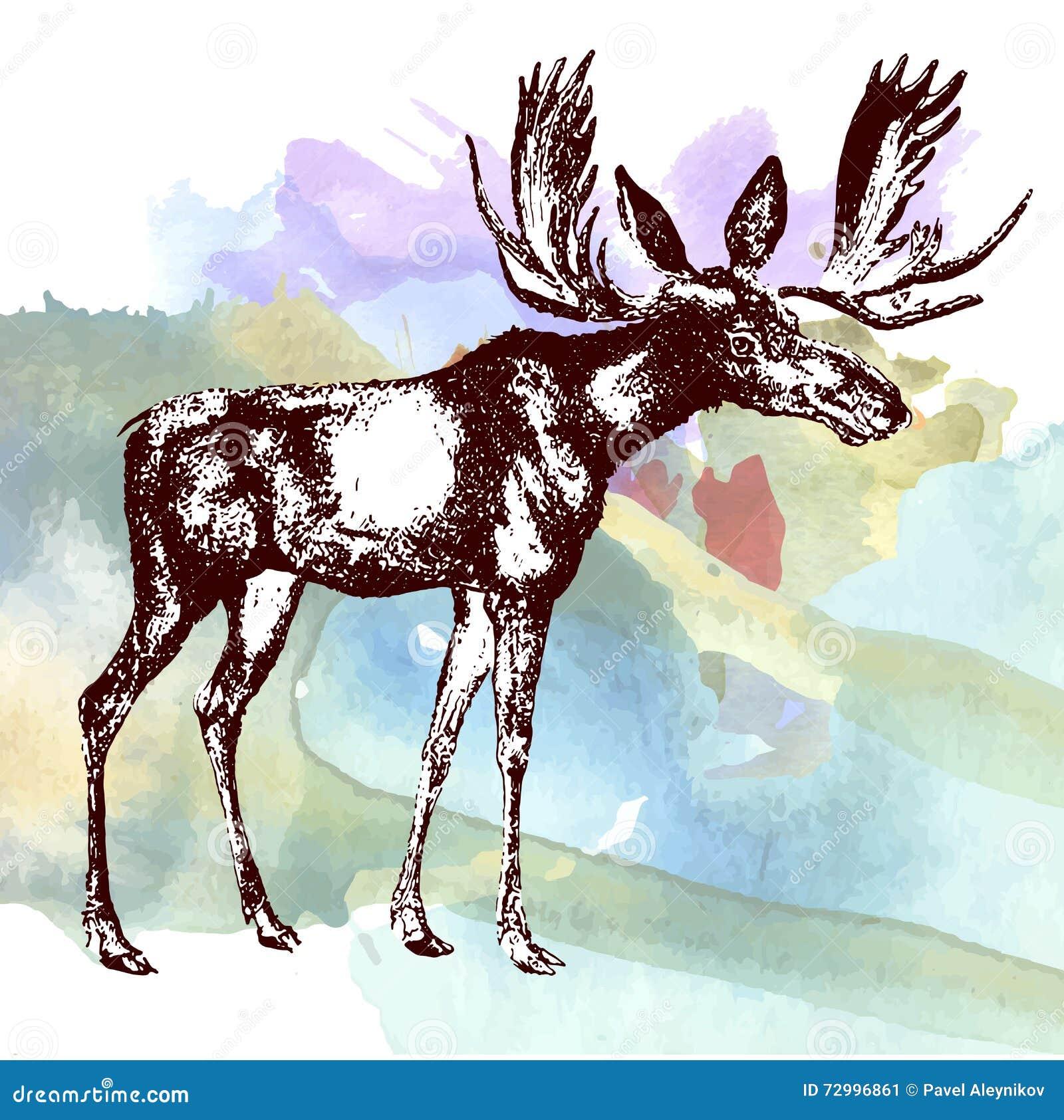 deer moose watercolor painting design template vector image stock