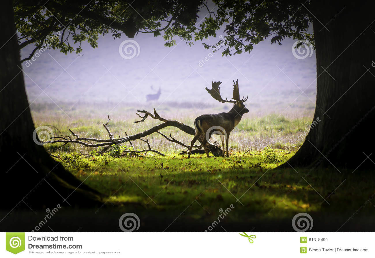 A deer in the morning mist