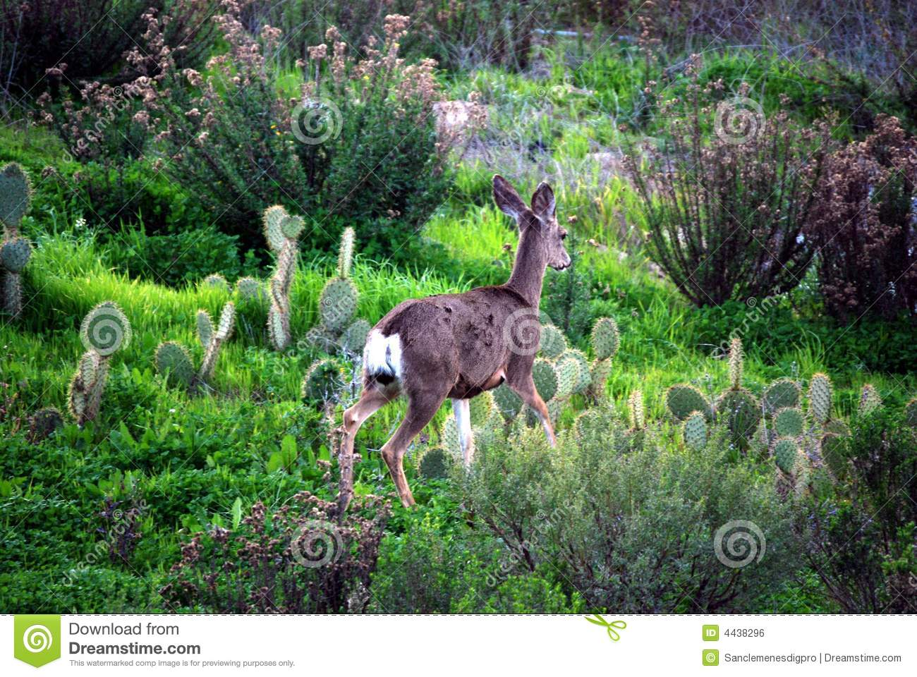 deer in natural habitat royalty free stock image image bridal bouquet clipart free bride & groom clipart free