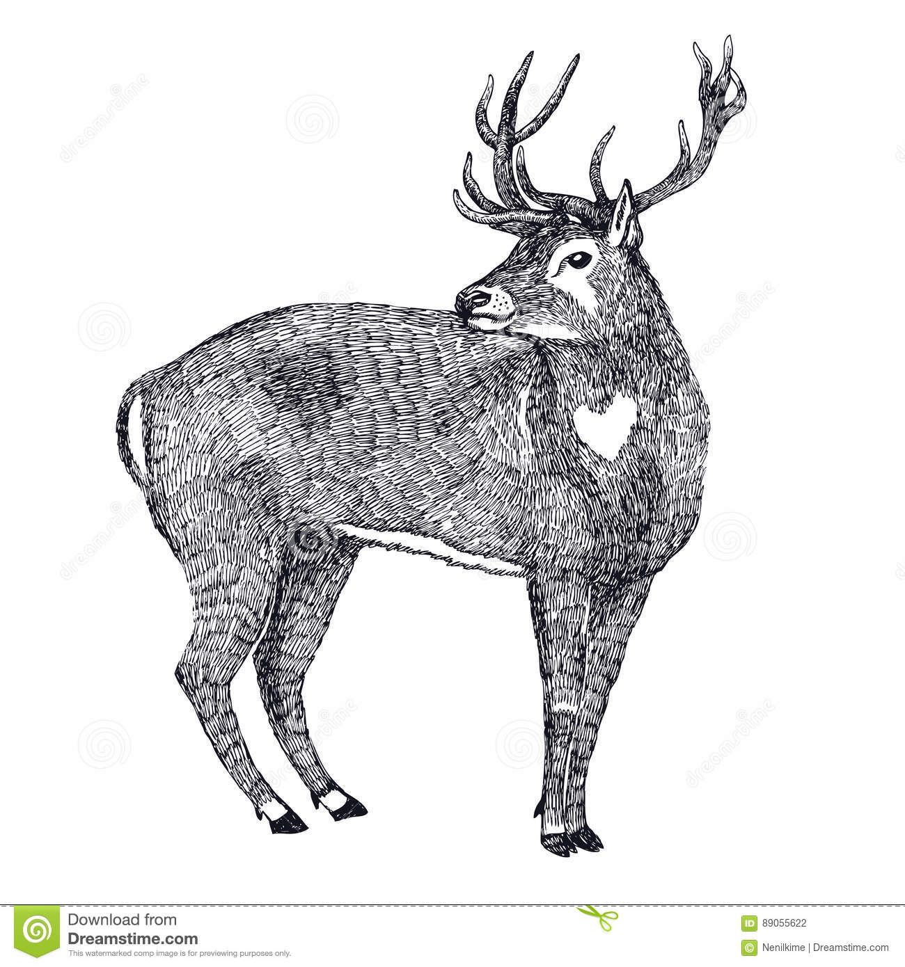 Deer Sketch Style Hand Drawing Stock Vector - Illustration of sketch ...
