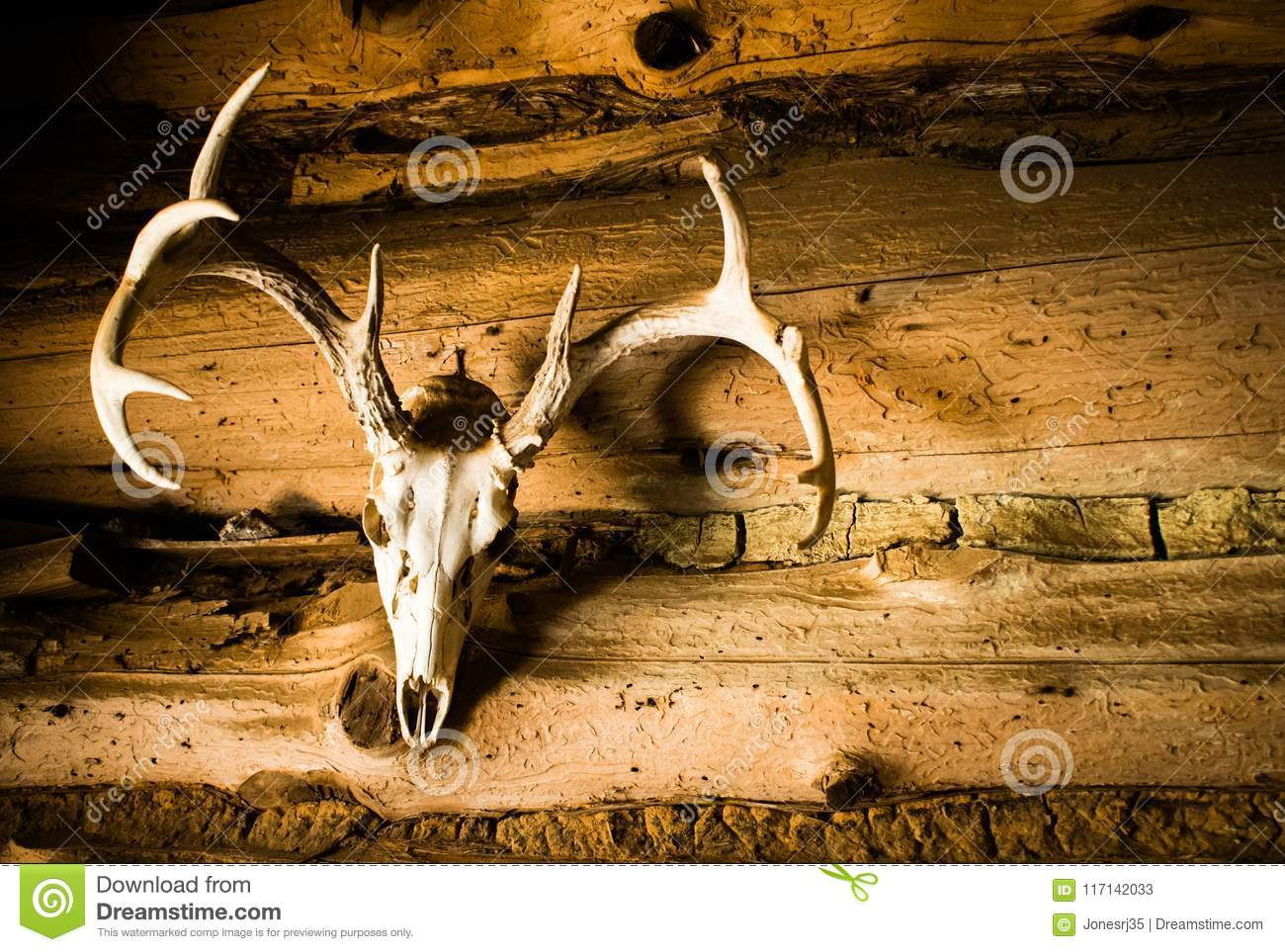 Deer Skull with Antlers as Wall Decoration