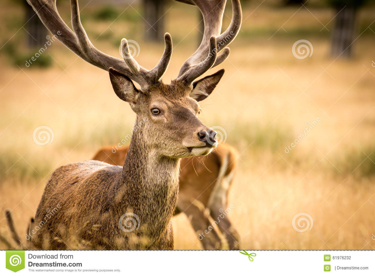 deer trail divorced singles Welcome to the different site for dating if you are an adventurous person and you are looking for a date, soul mate or activity partner this is the right place.
