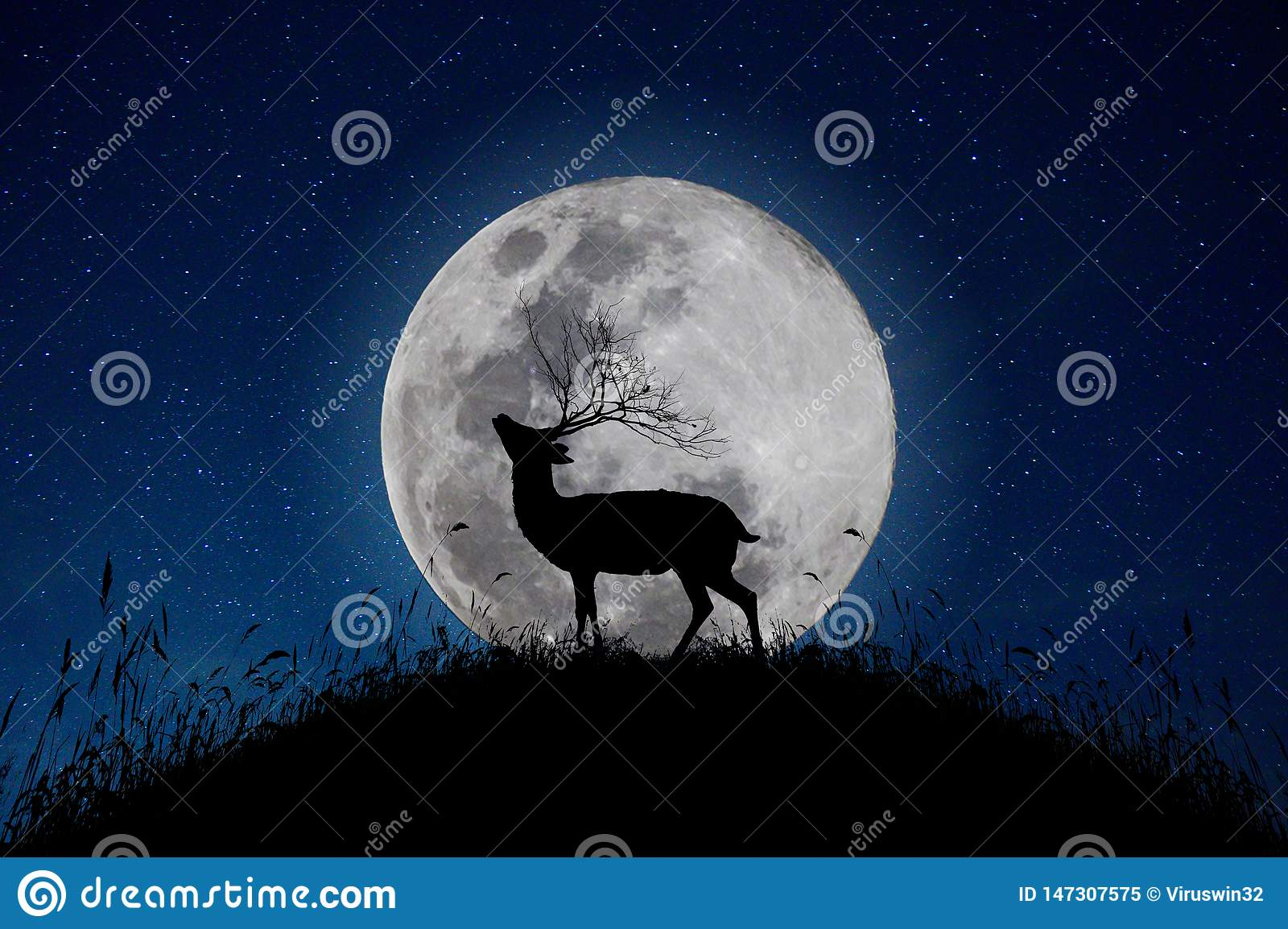 The deer stands on the mountain a large moon background in the night that the stars are full of sky