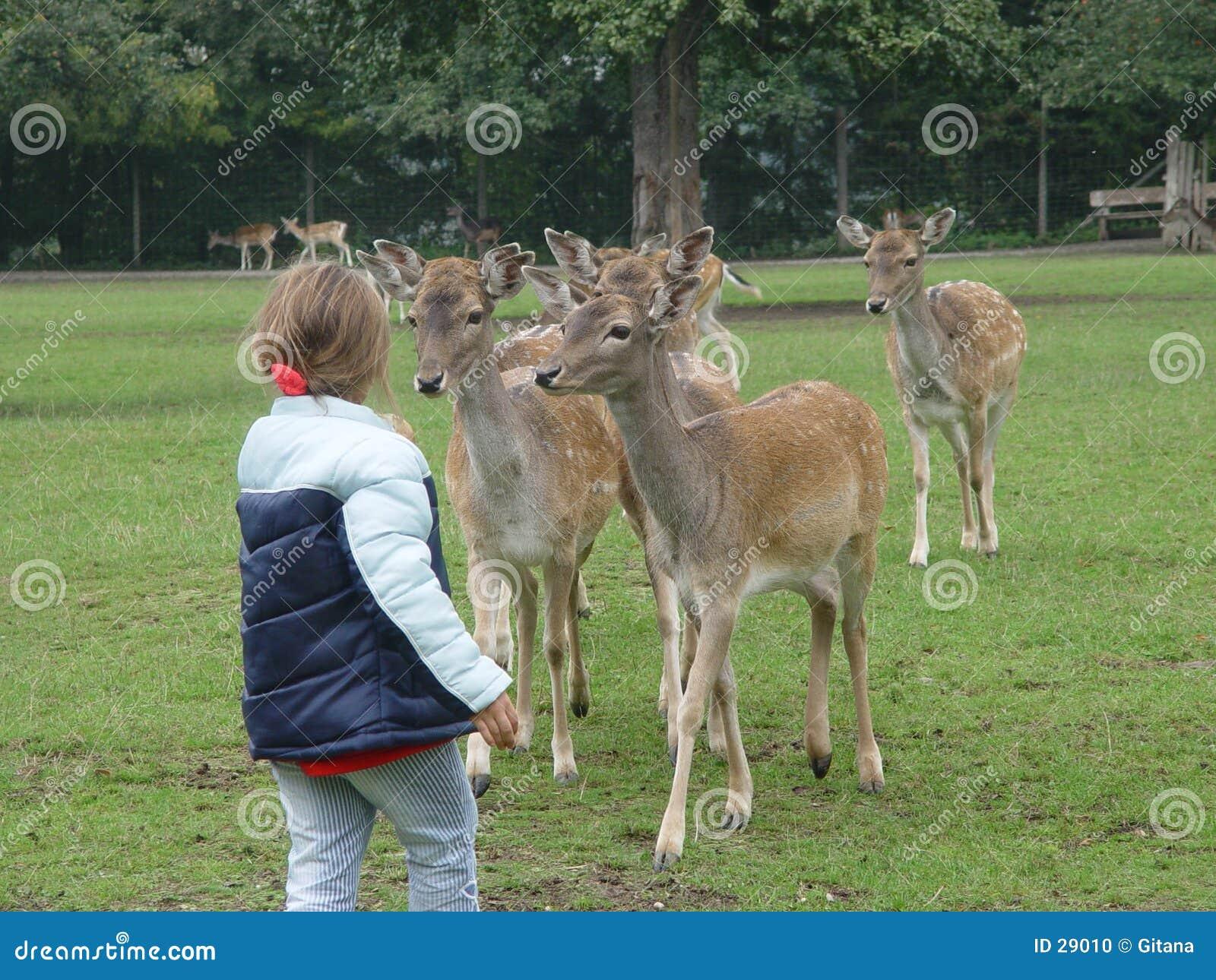 Deers affrichés