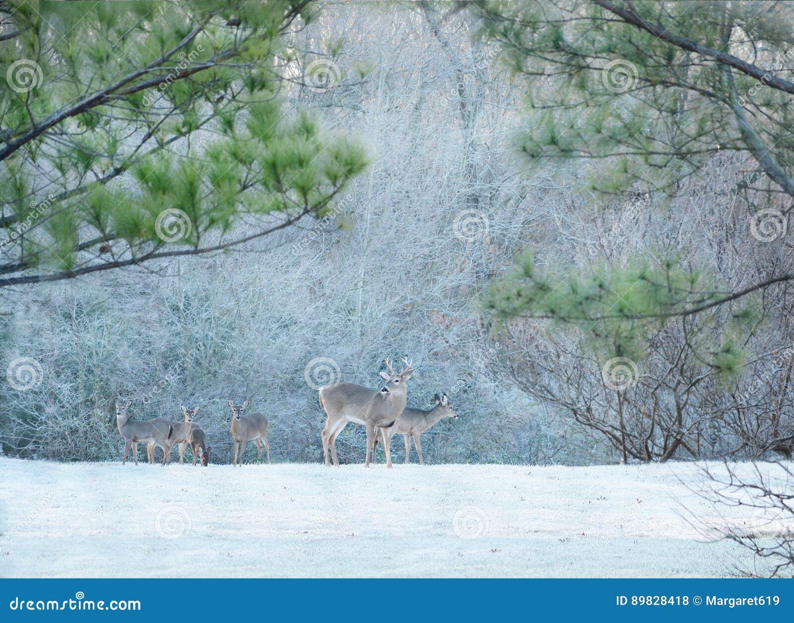 Deers in ijzig bos
