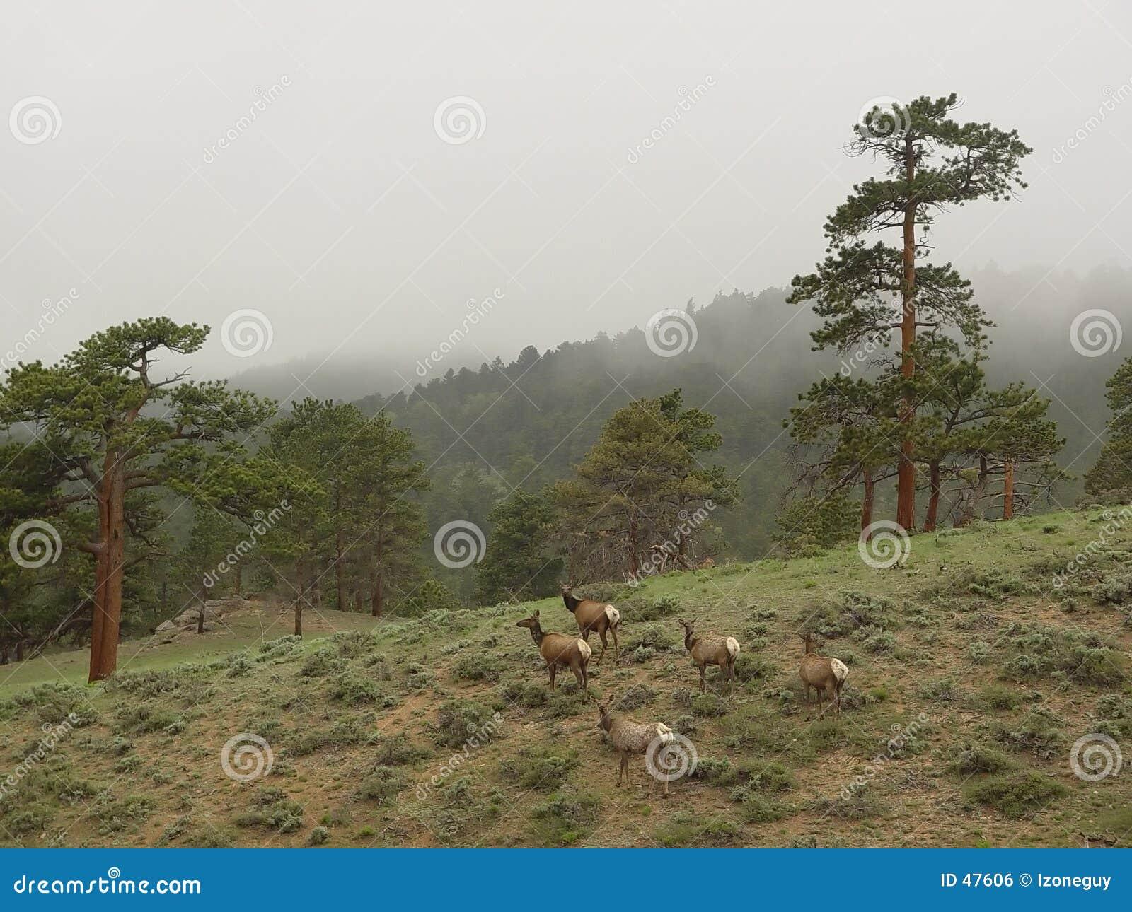 Deers nas montanhas