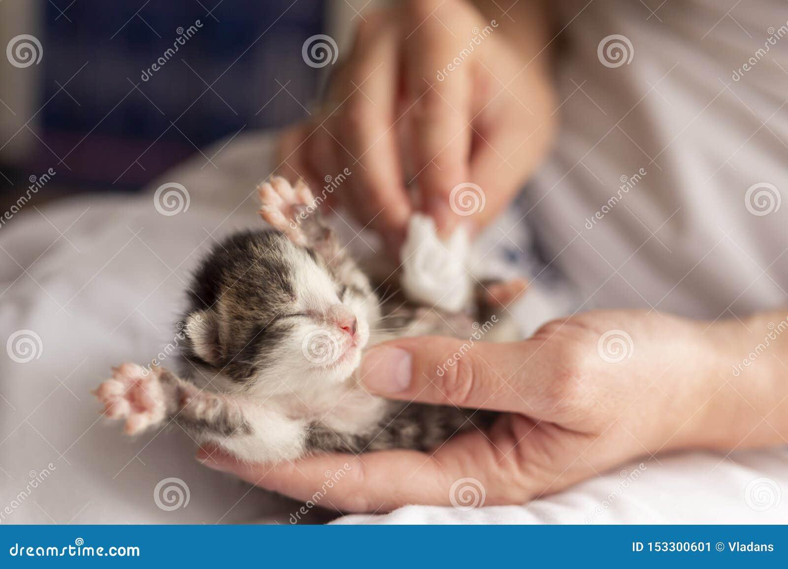 Defecaciones estimulantes del gatito de la mujer