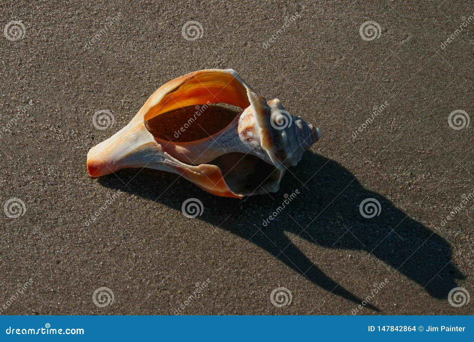 Defektes Shell auf Sandy Beach