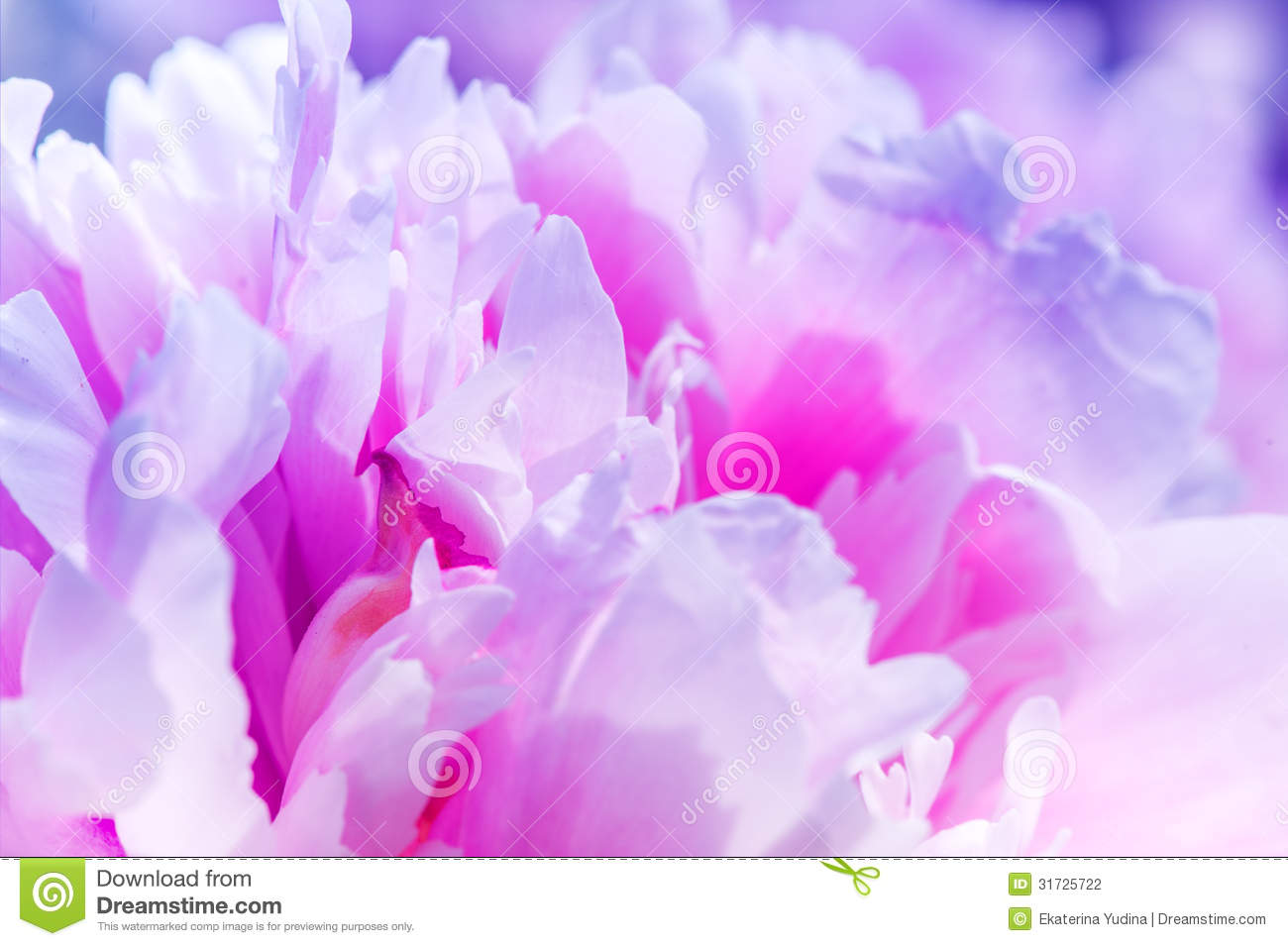 Defocus Beautiful Pink Flowers Abstract Design Stock Photo Image