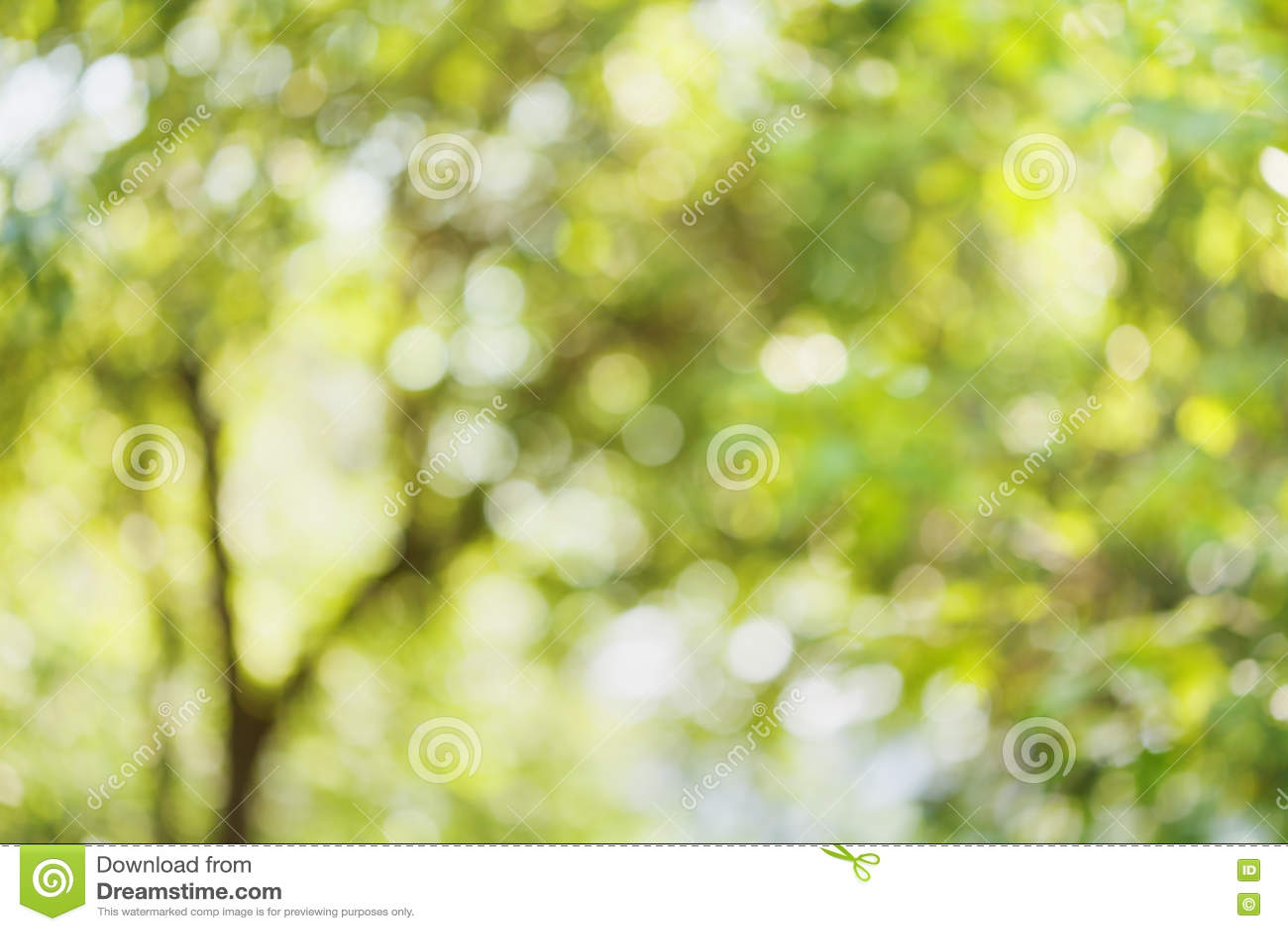 Defocused树美好的bokeh背景  绿色叶子自然被弄脏的背景  夏天或春季