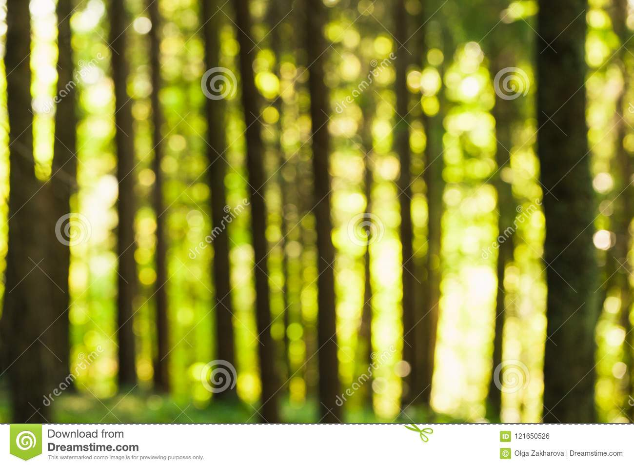 Forest Bokeh In Daylight stock photo. Image of colorful ...