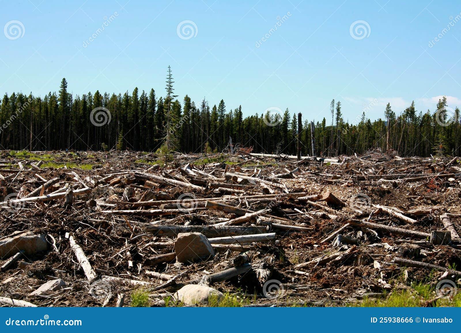 Deforestation Stock Photo Image Of Global Nature Trunk