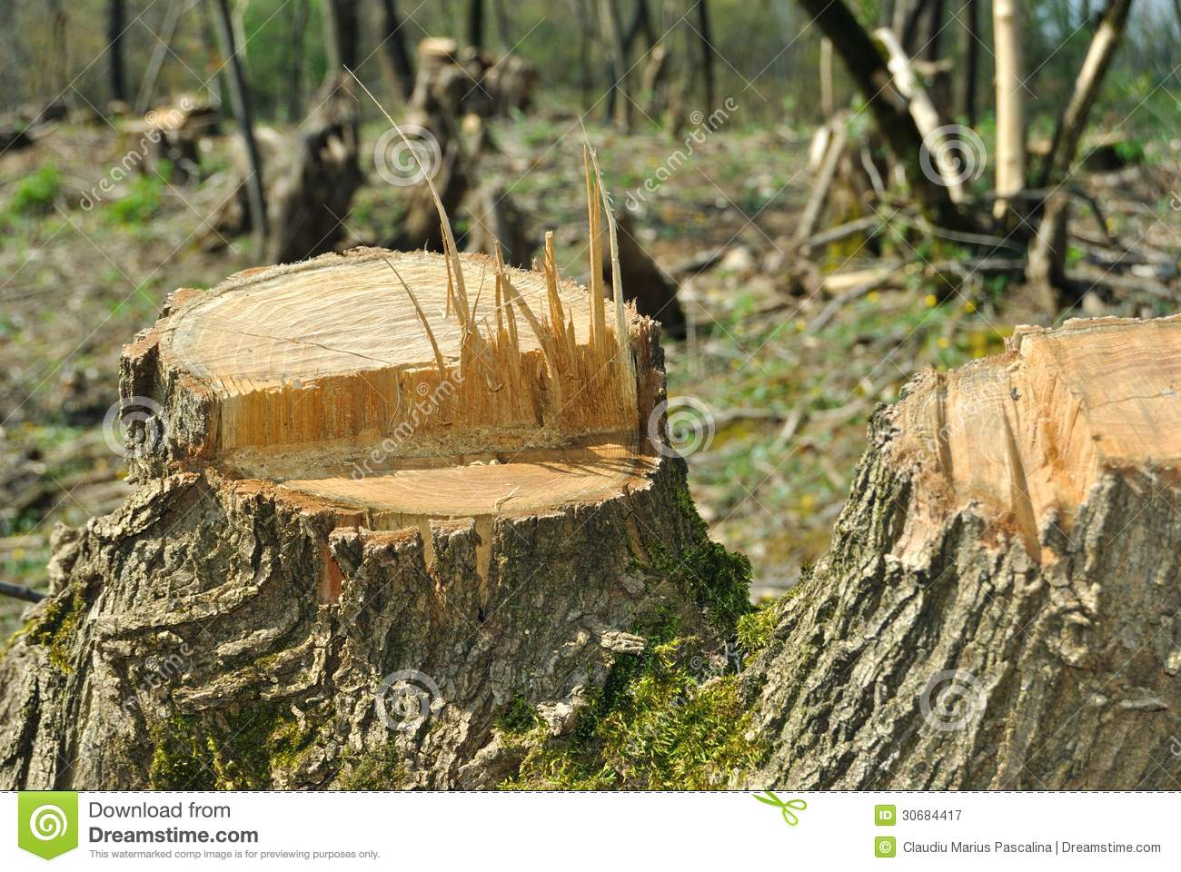 Deforestation stock image. Image of industry, large, closeup.