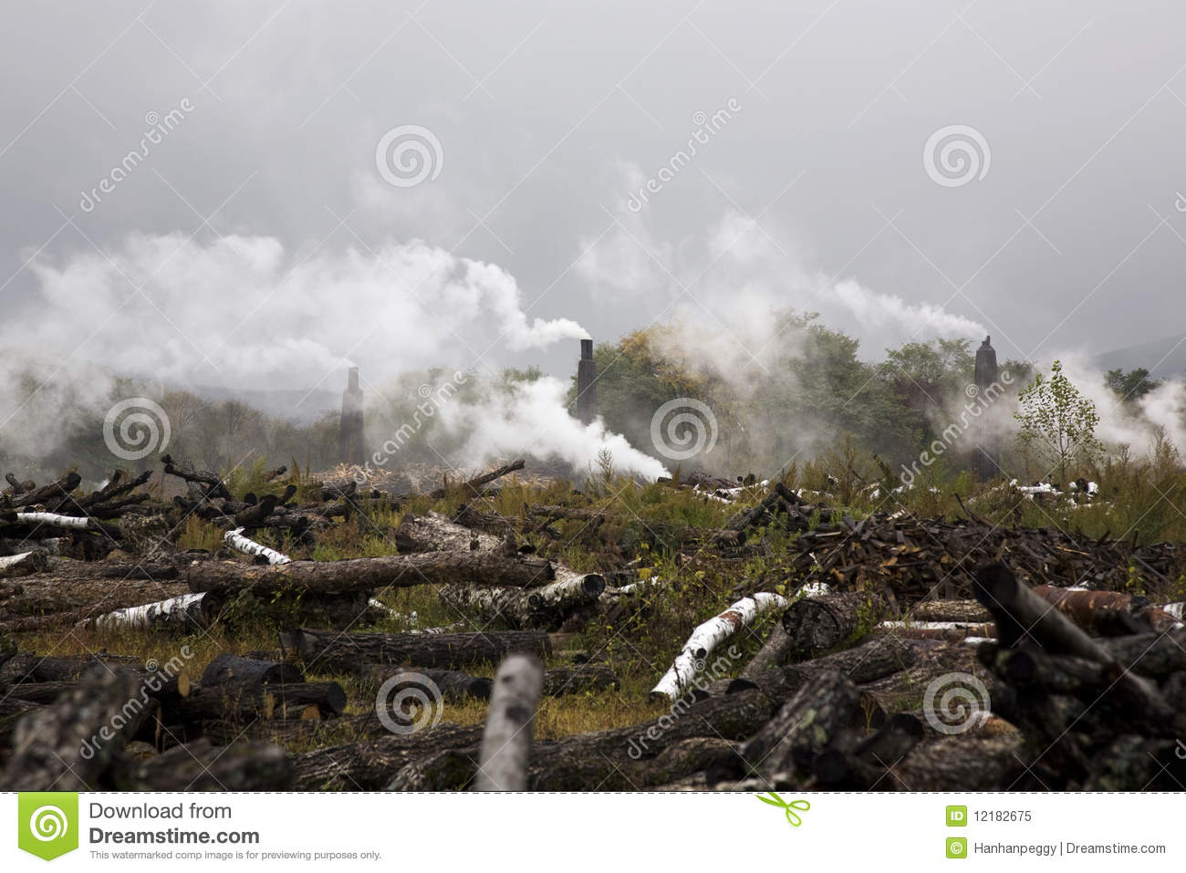 Deforestation and environmental pollution