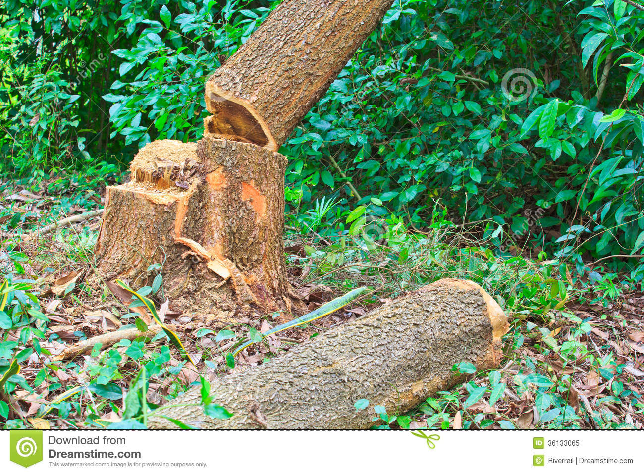 Deforestation stock image. Image of cutting, concept 30684417.