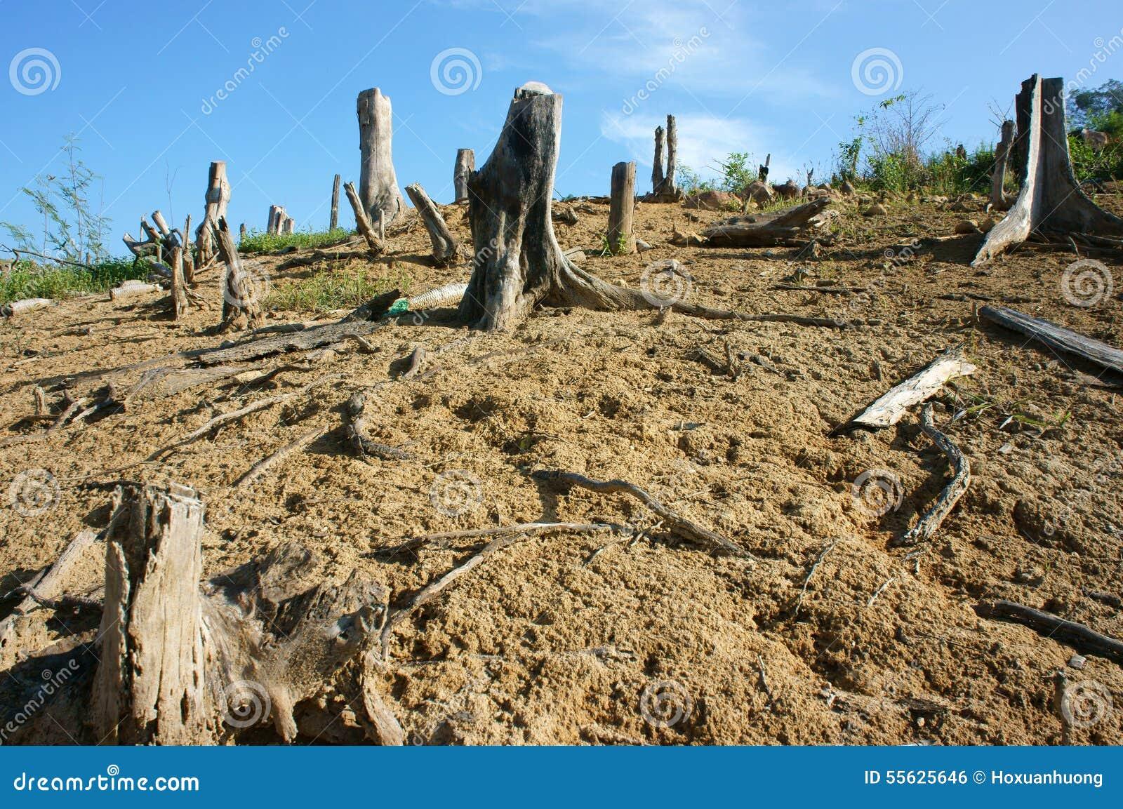 Deforestation, stump, change climate, living environment