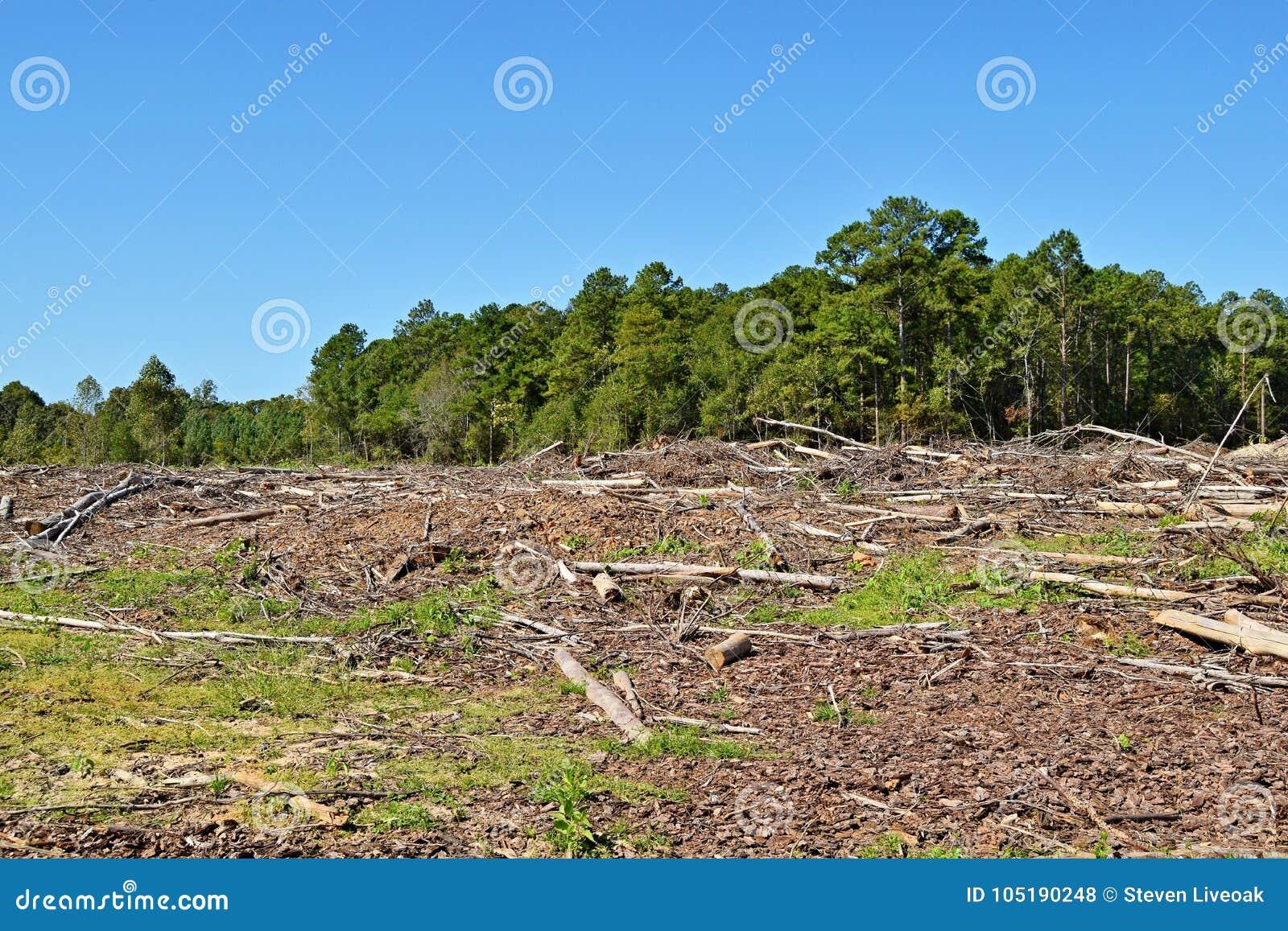 Deforestedland door machines wordt ontruimd die