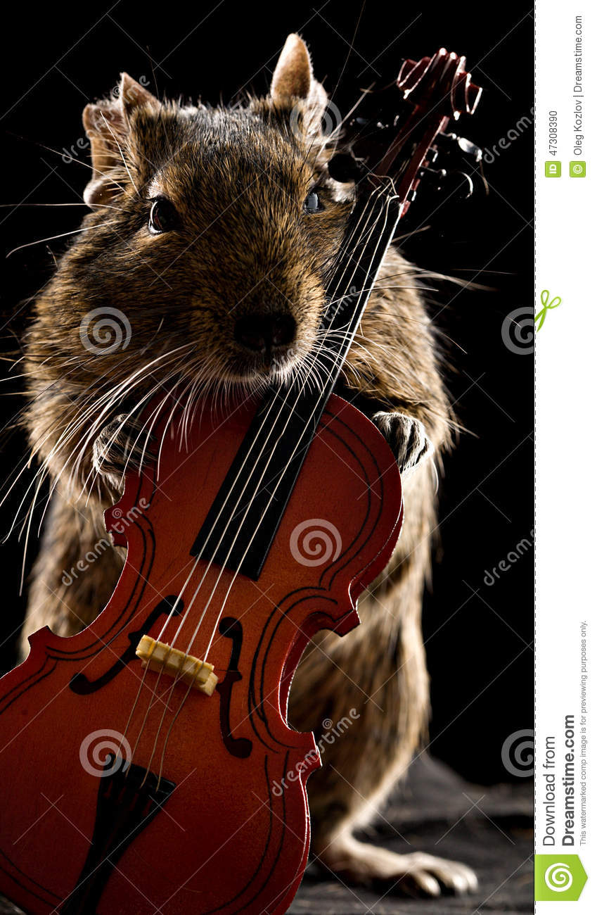 Degu Hamster Standing With Cello Stock Photo - Image: 47308390