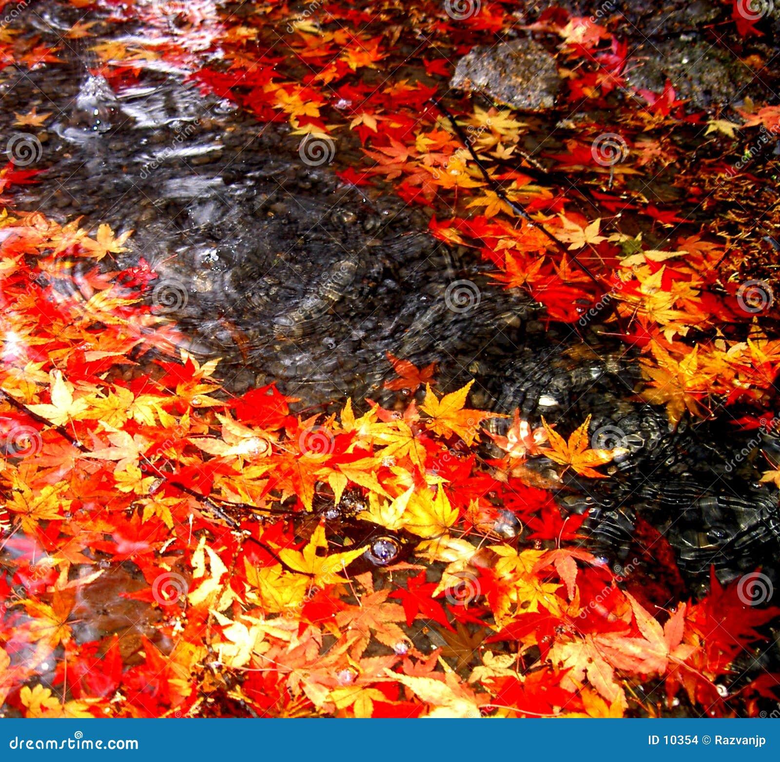 Deixar cair do outono