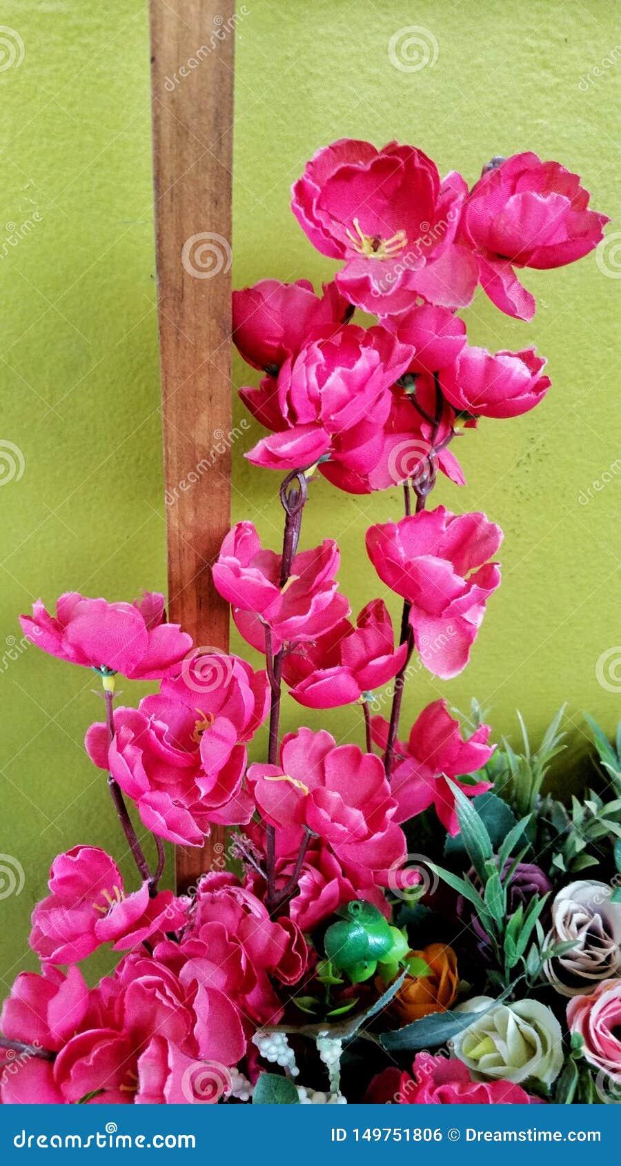 Dekoracyjna menchia kwitnie dla ogródu