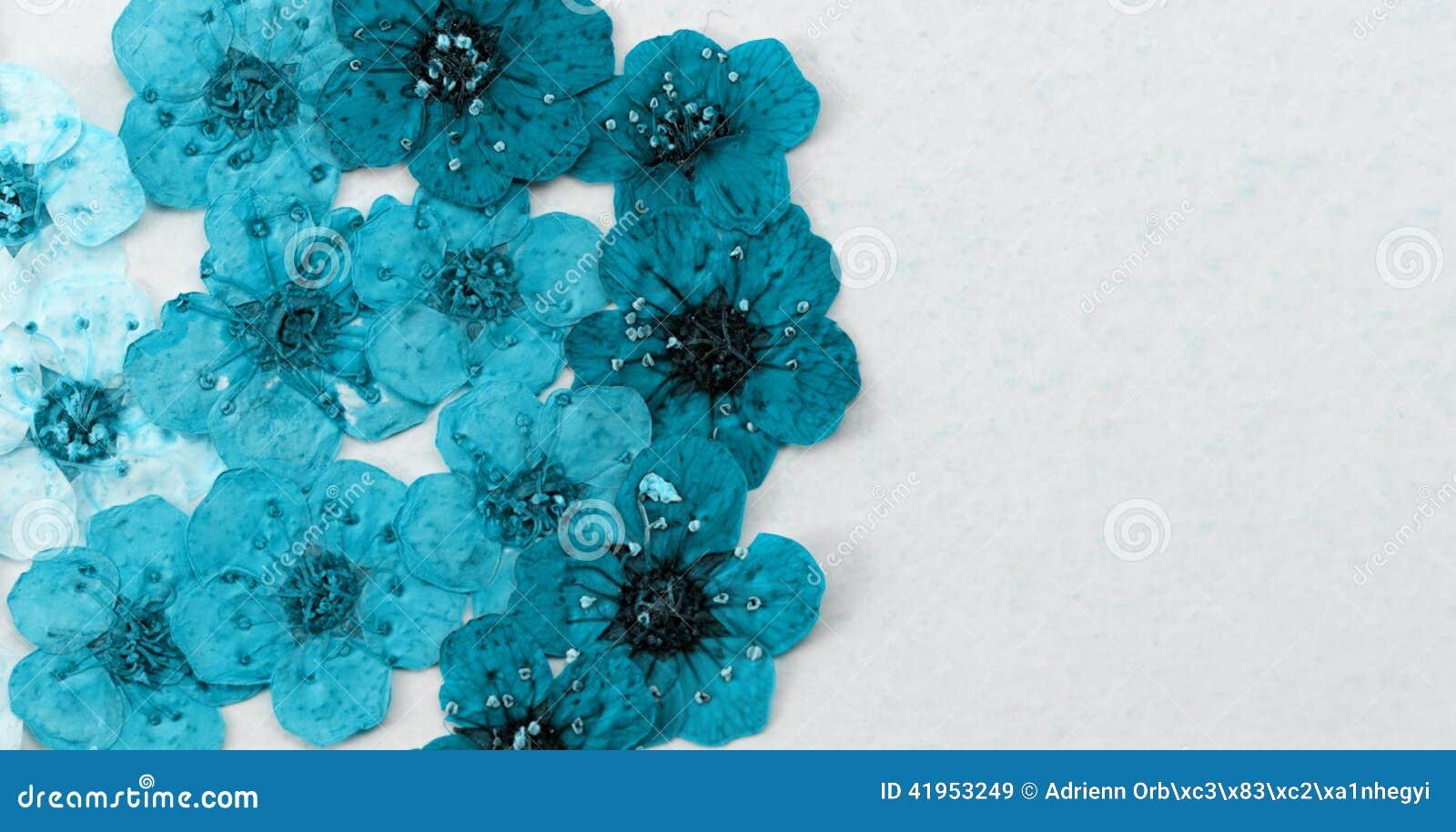 Dekoracyjna montaż kompilacja kolorowa wysuszona wiosna kwitnie