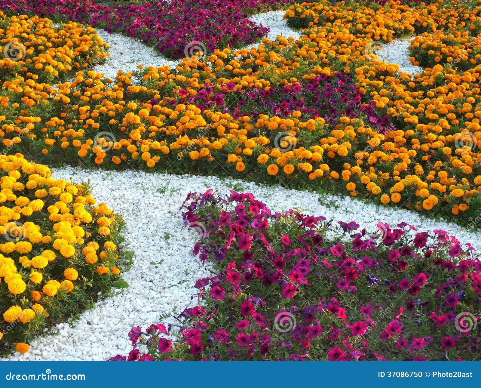 Download Dekoracyjny flowerbed zdjęcie stock. Obraz złożonej z wzór - 37086750