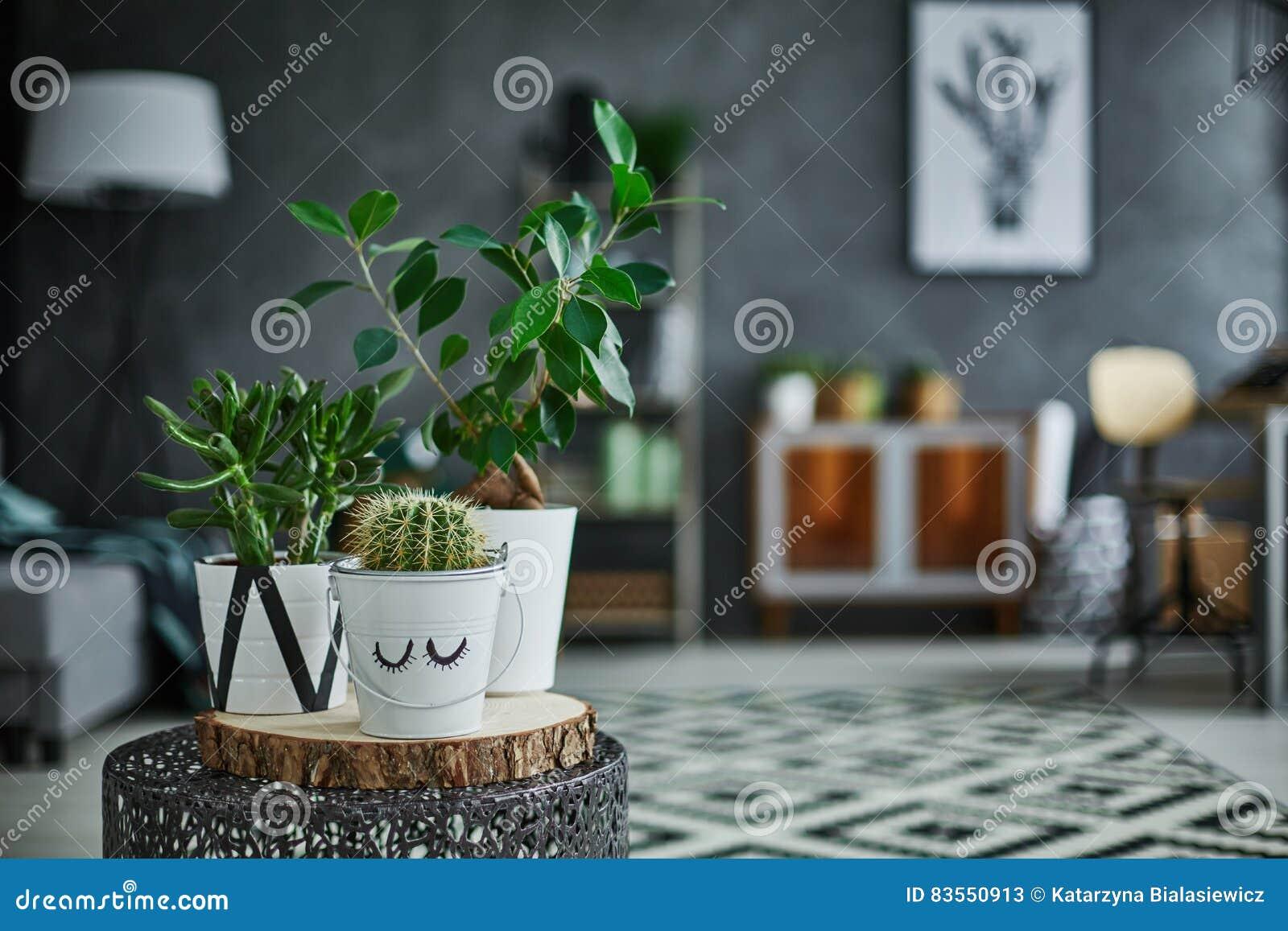 Dekoracyjny zielony houseplant w garnku